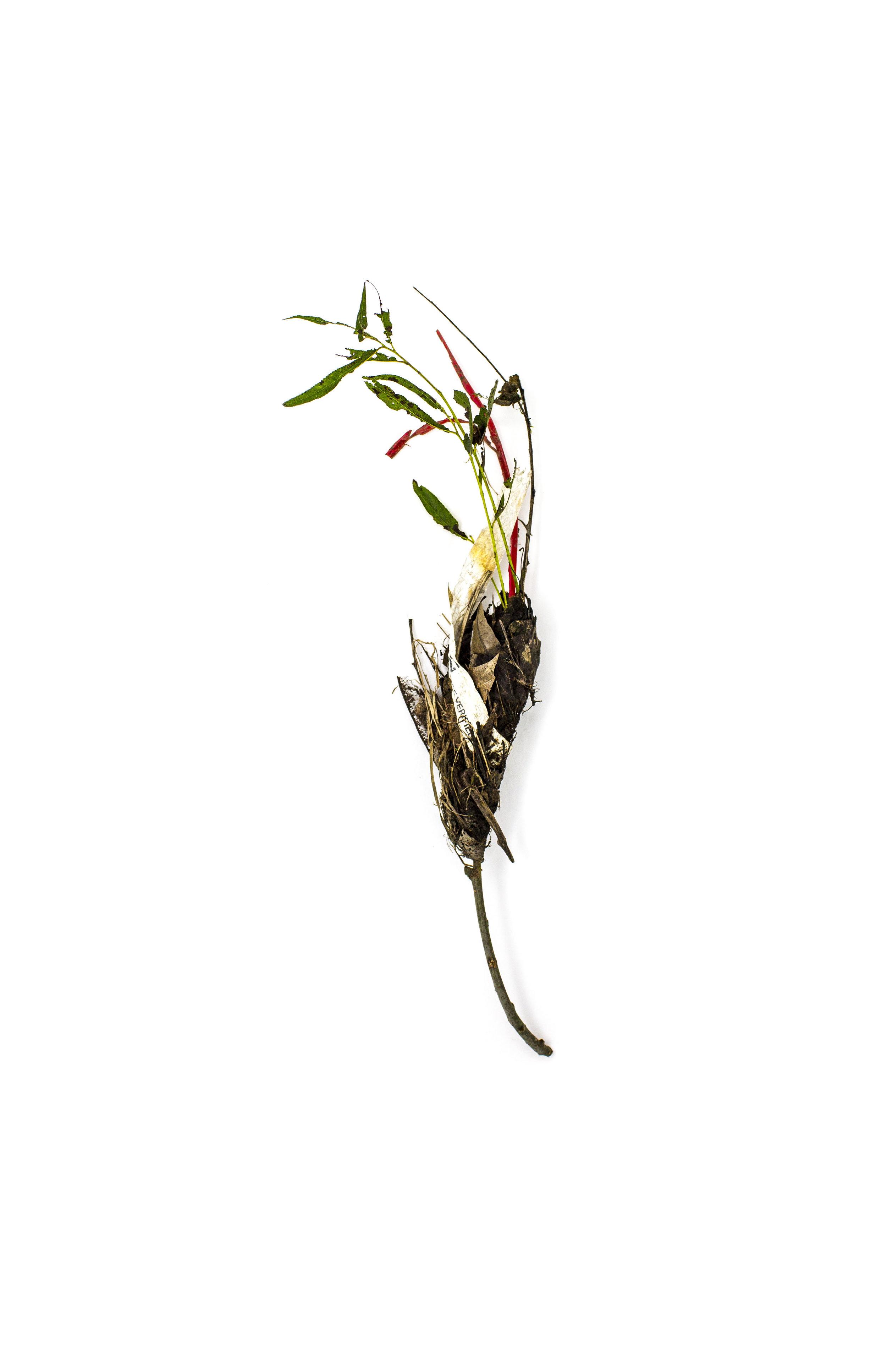 Debris_Flower_17.jpg