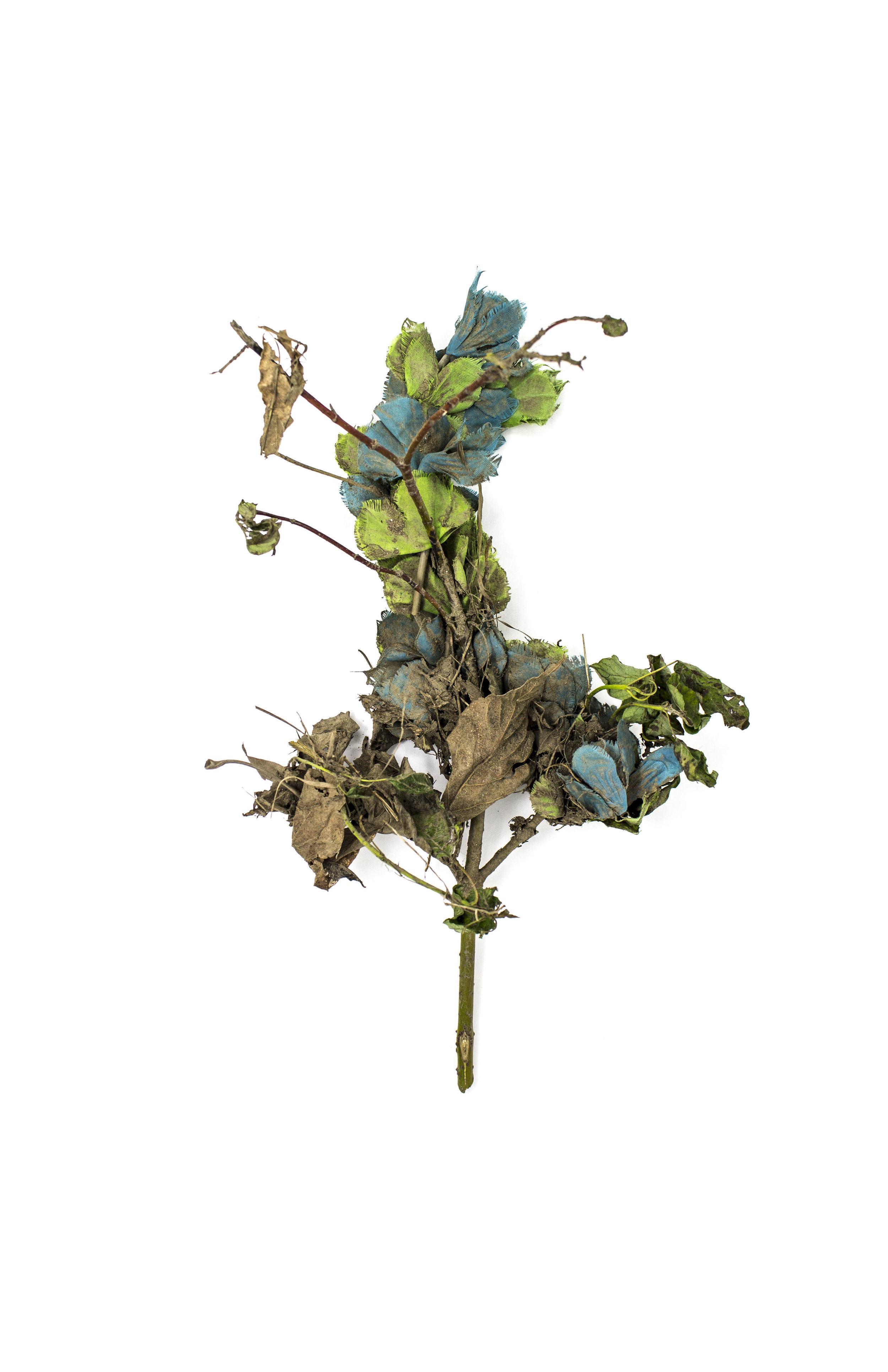 Debris_Flower_21.jpg