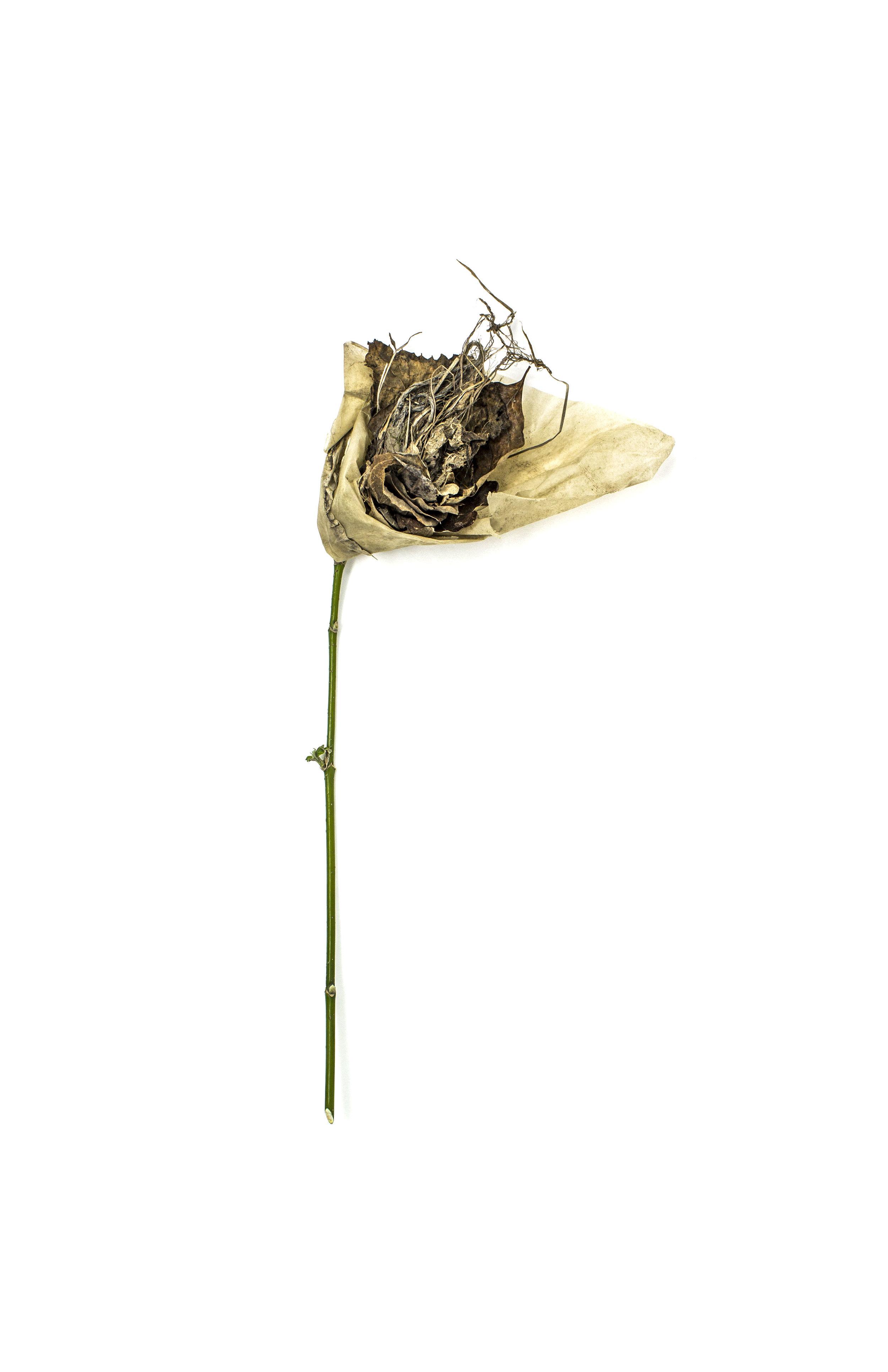Debris_Flower_23.jpg