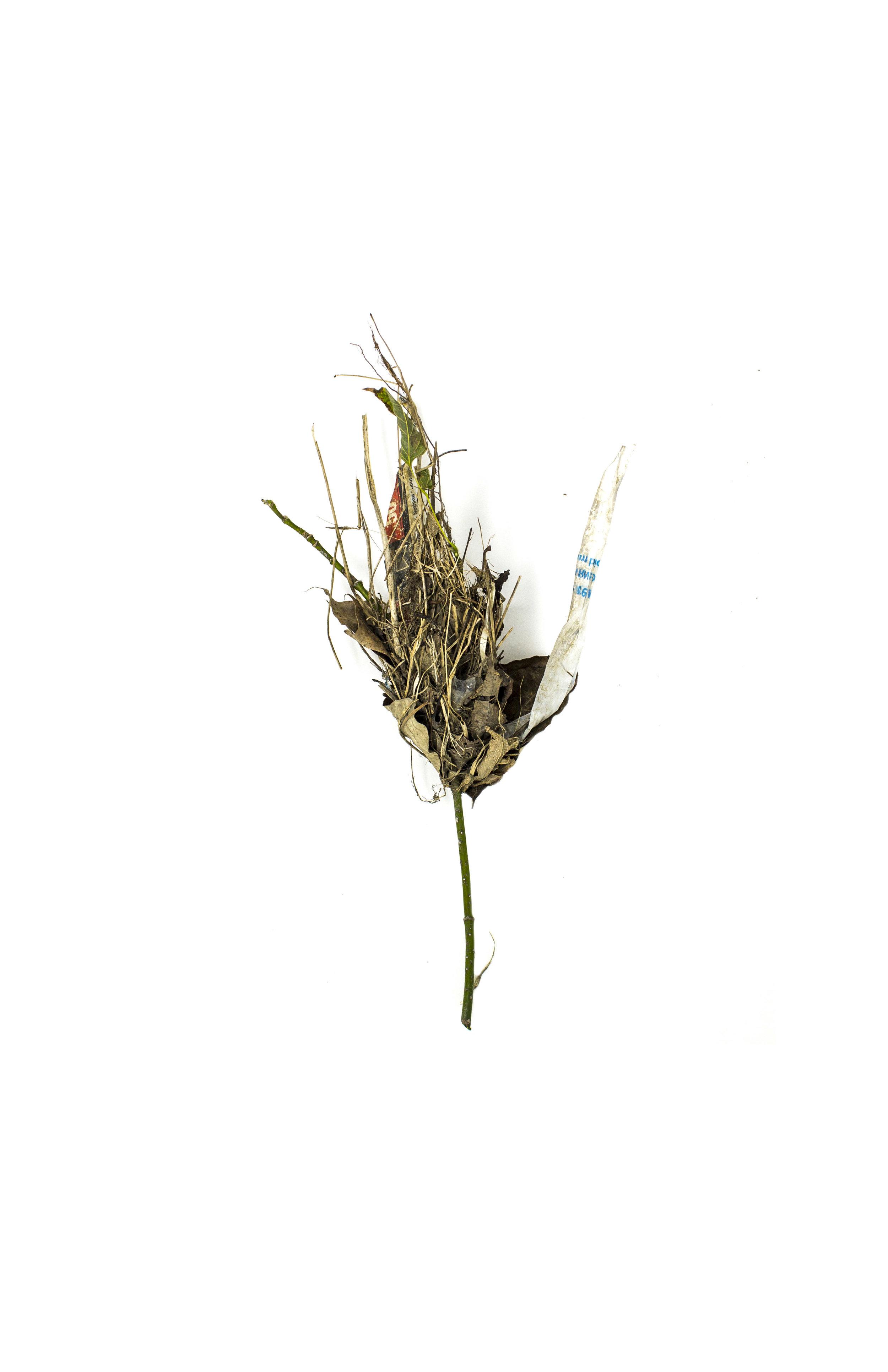 Debris_Flower_24.jpg