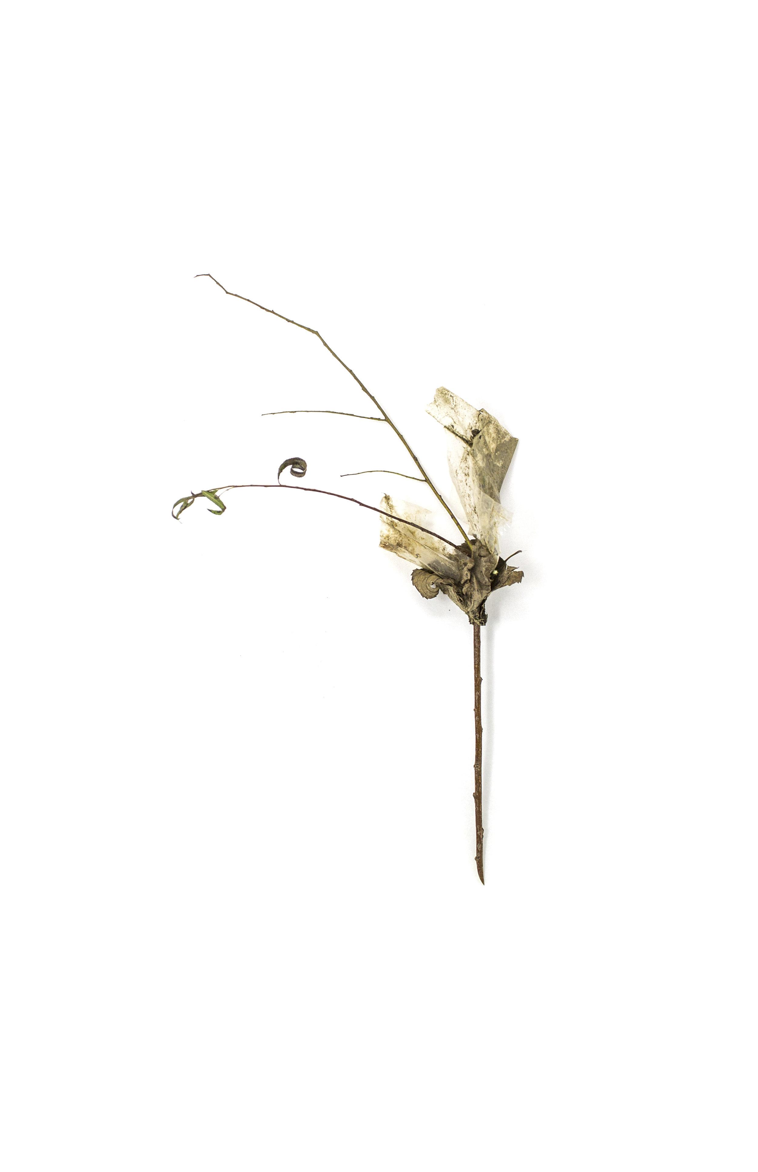 Debris_Flower_25.jpg