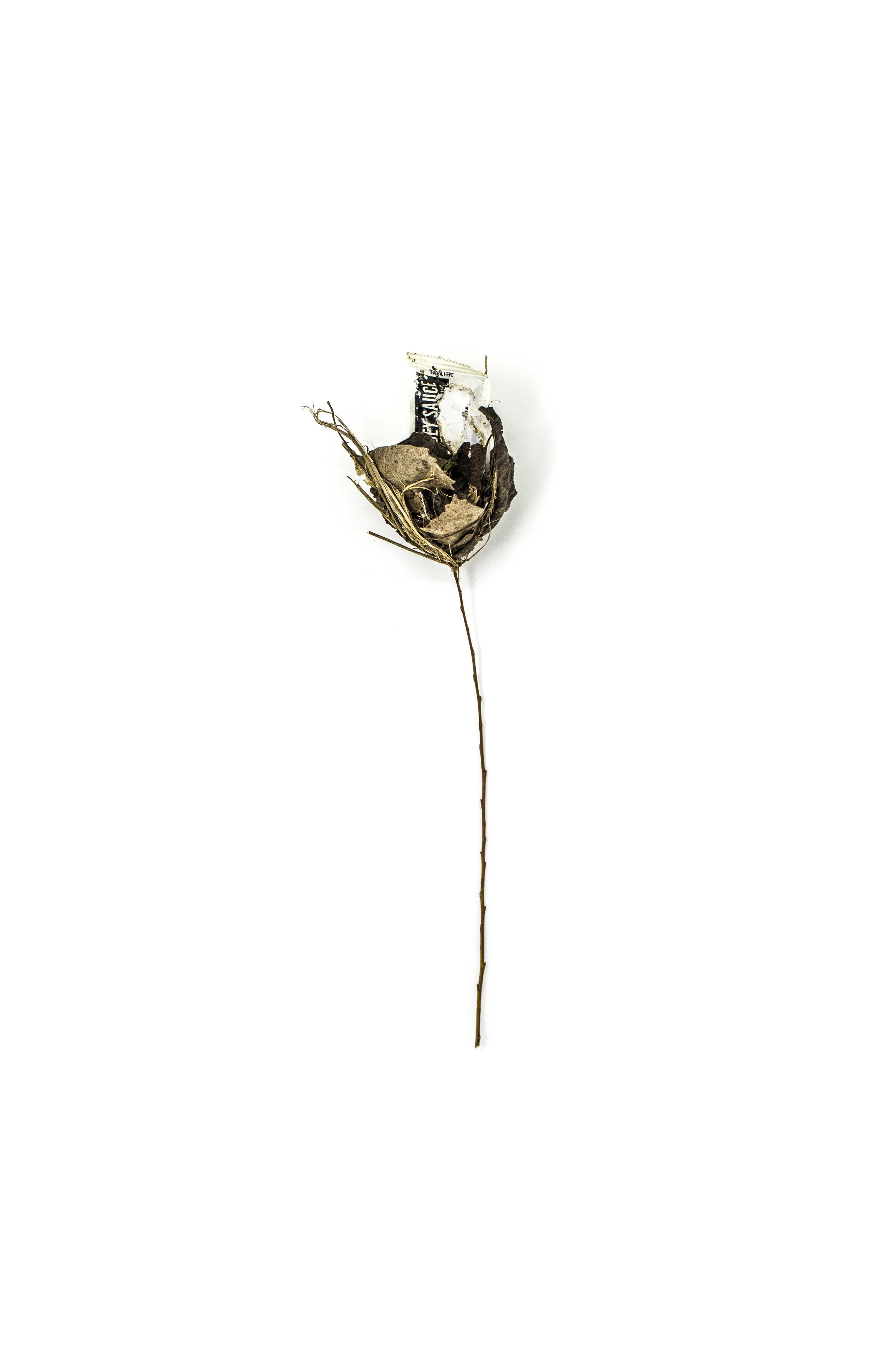Debris_Flower_28.jpg