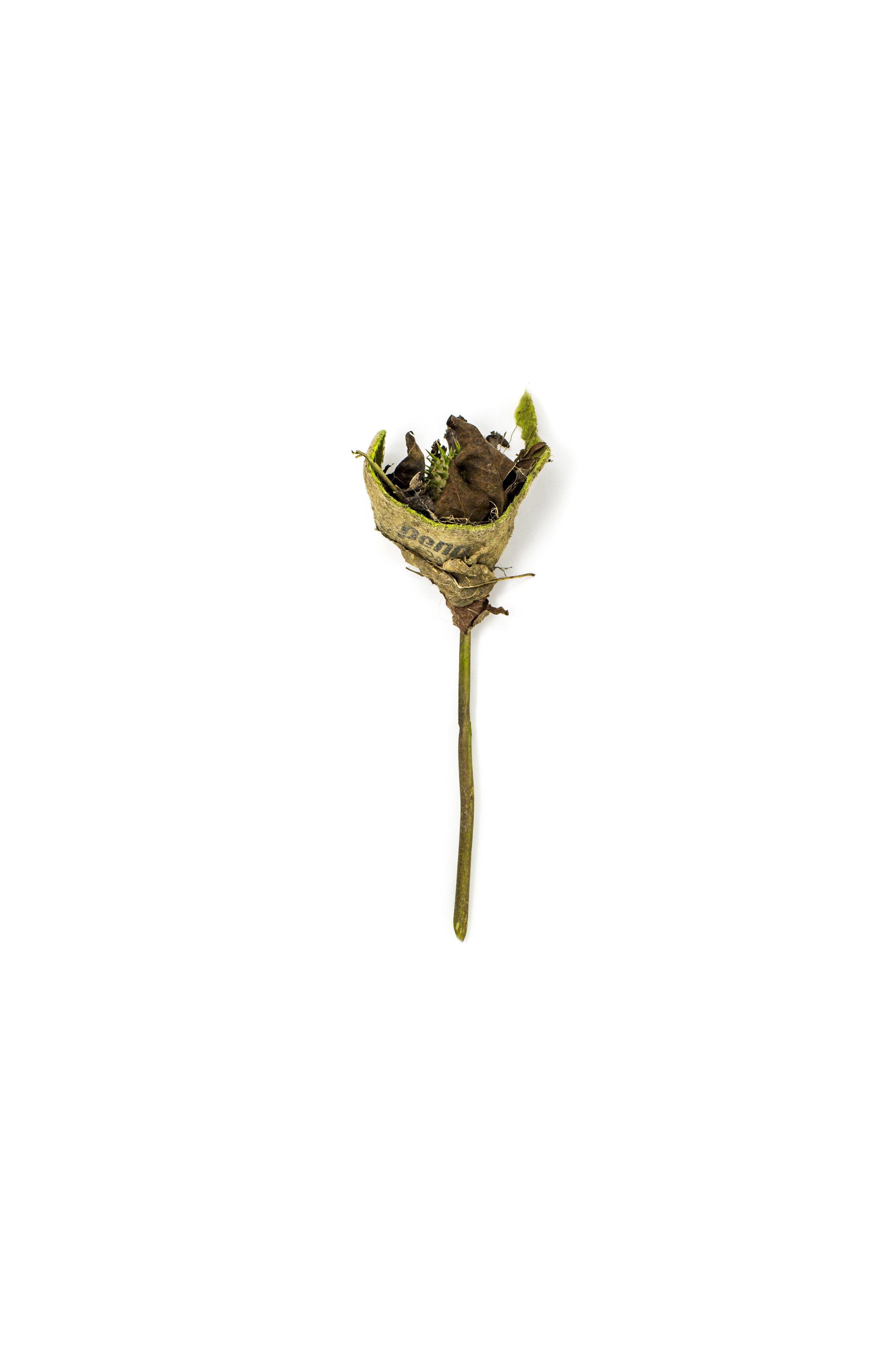 Debris_Flower_29.jpg