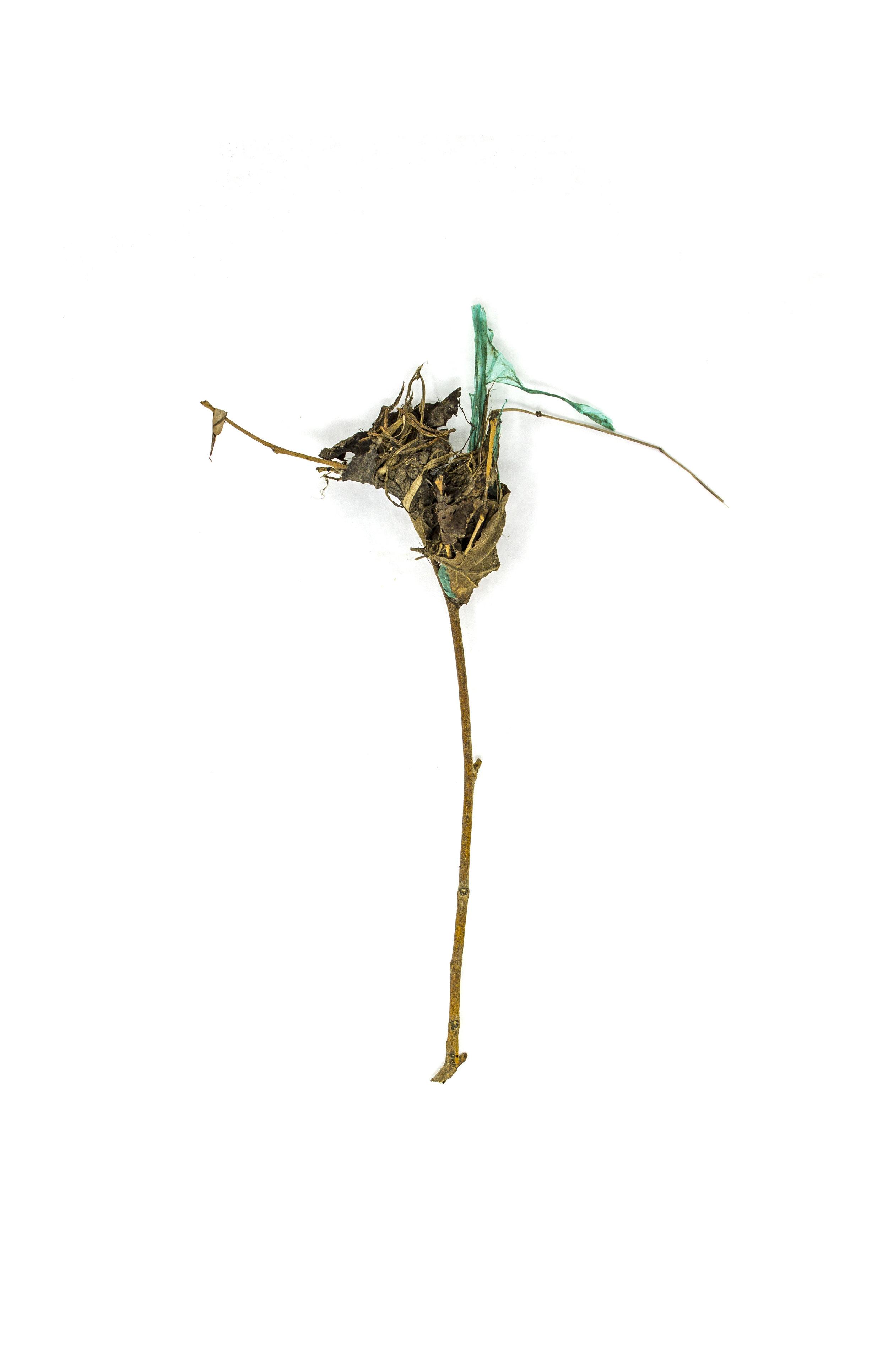 Debris_Flower_34.jpg