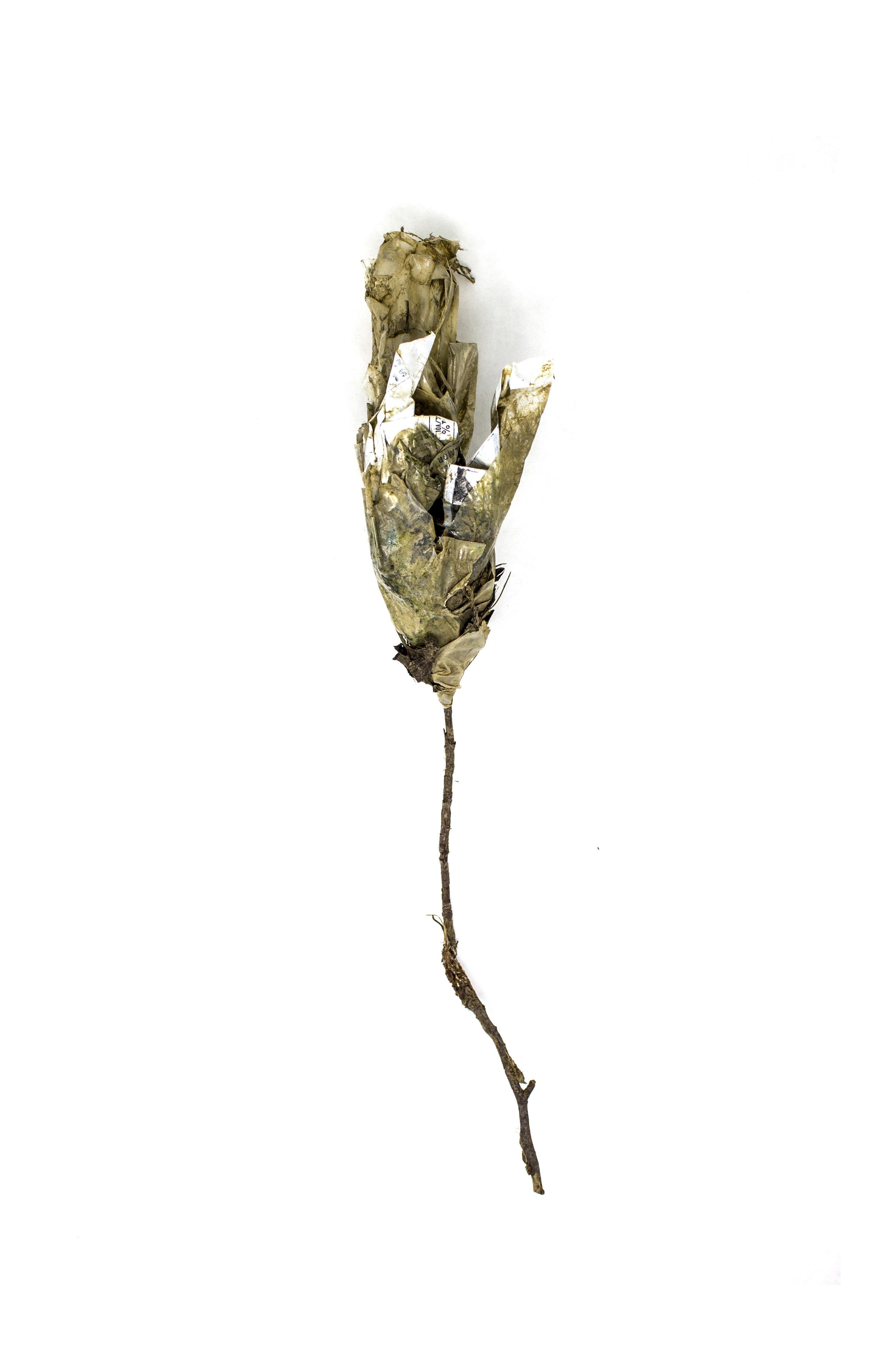 Debris_Flower_40.jpg