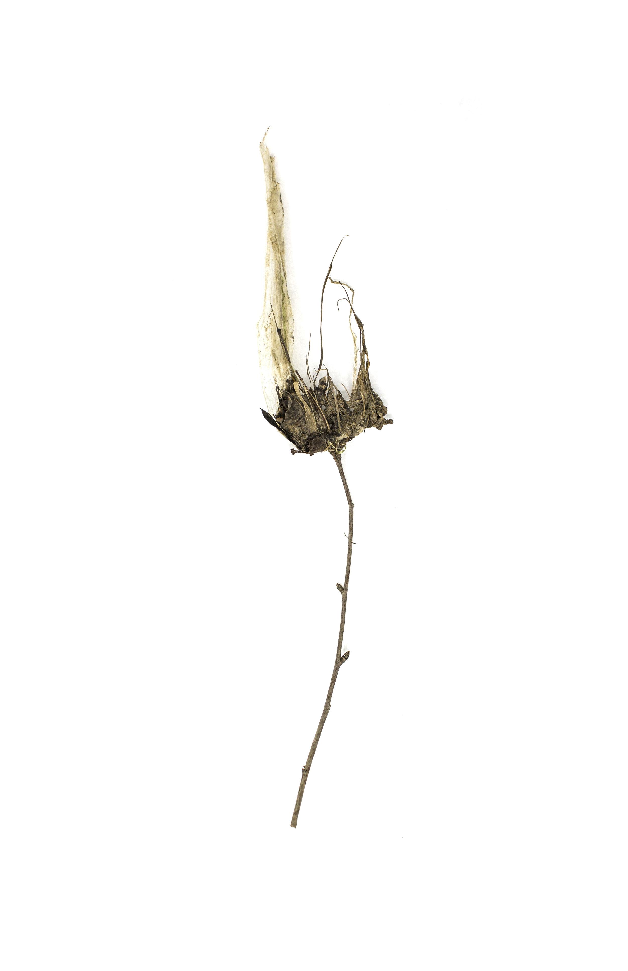 Debris_Flower_42.jpg