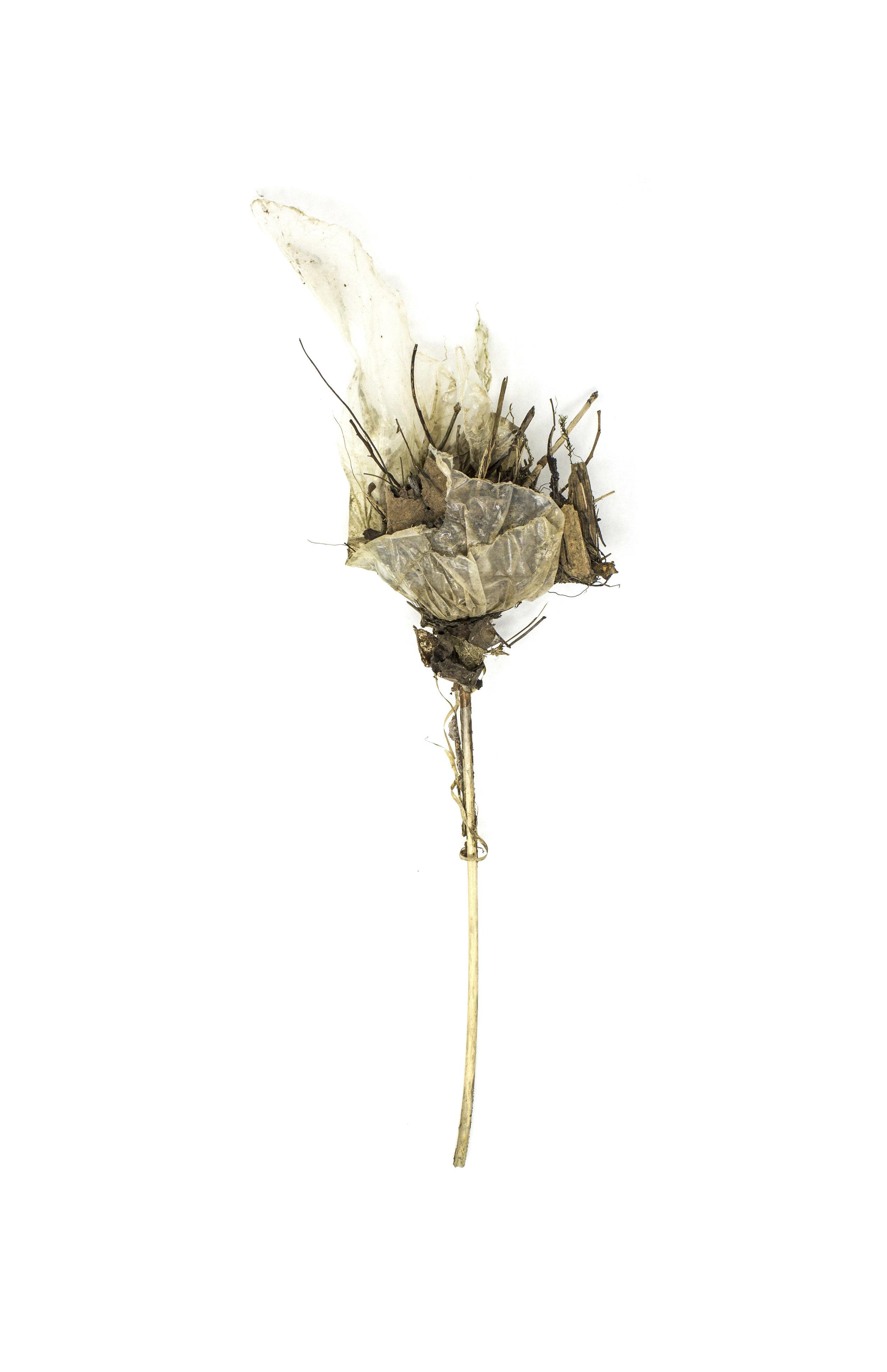 Debris_Flower_46.jpg