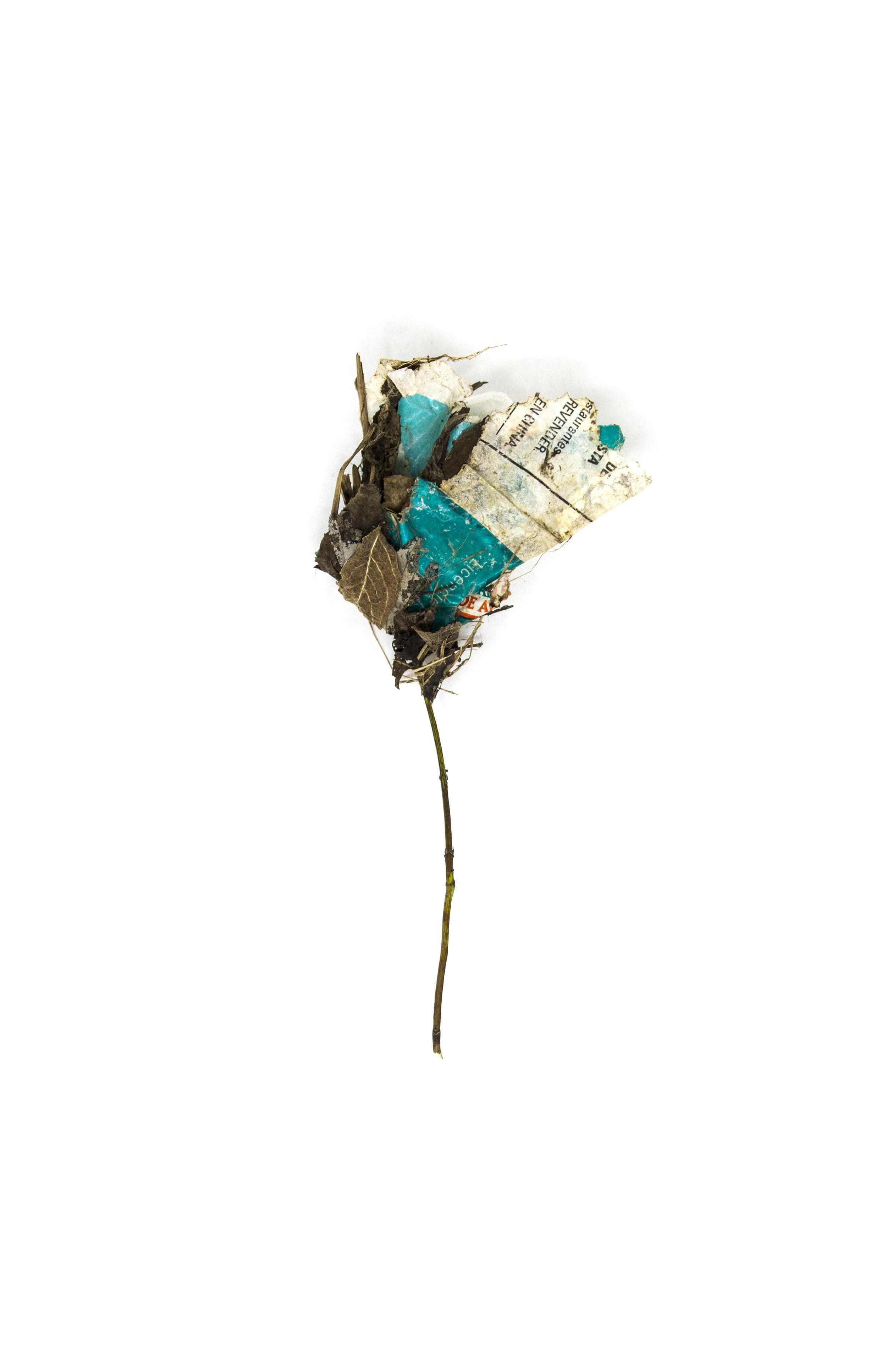 Debris_Flower_52.jpg