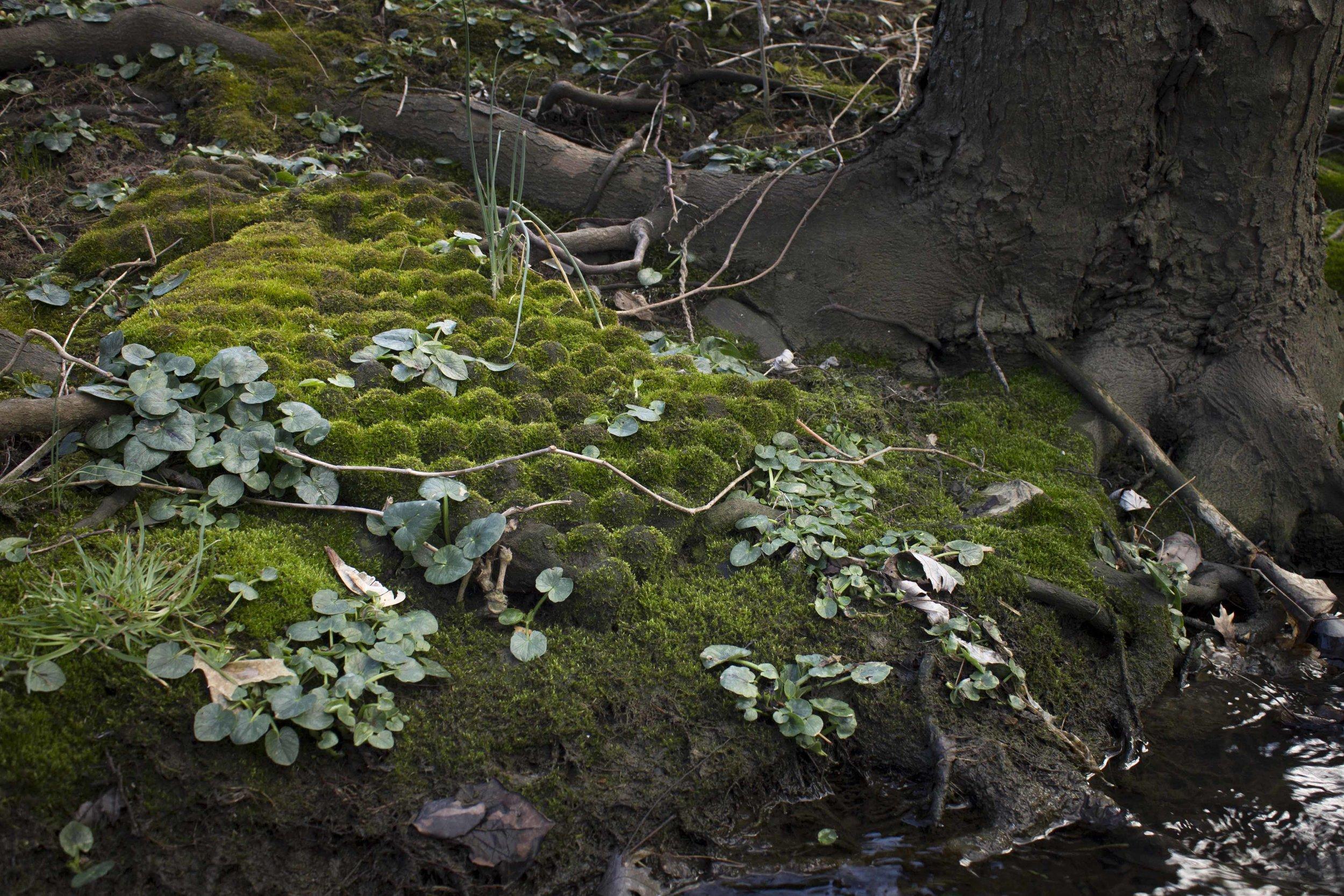 moss blanket egg crates .jpg