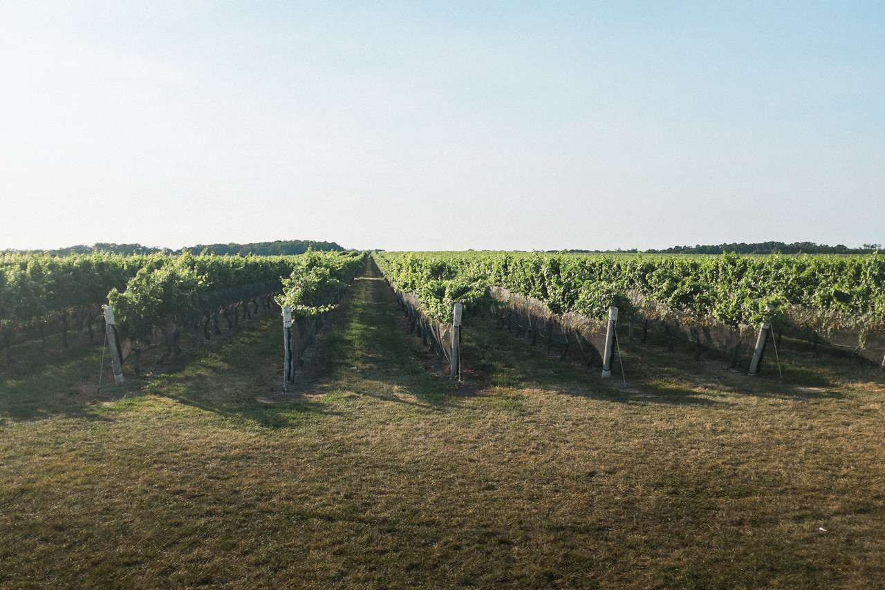 A view of Pindar's vineyard.