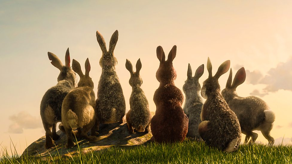 watership down 1.jpg