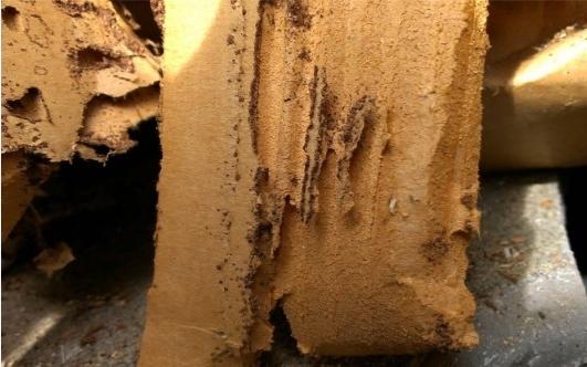 Termite Damaged Cardboard