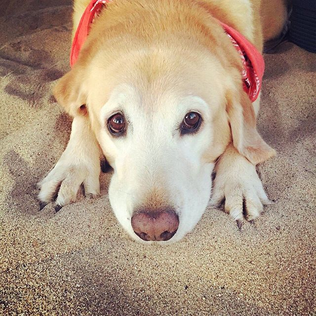 Monday mornings are RUFF 🐾 Annie wishing it was still the weekend 🏖 . . . #highschoolseason #volleyballteam #volleyballtime #hsvolleyball #girlsvolleyball #girlssoccer #girlstennis #hssoccer #hstennis