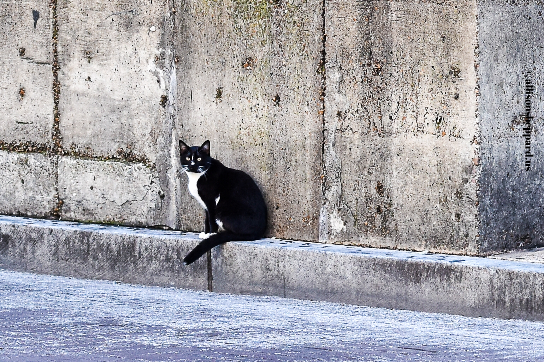 Cat. Beale Street. December 2016.