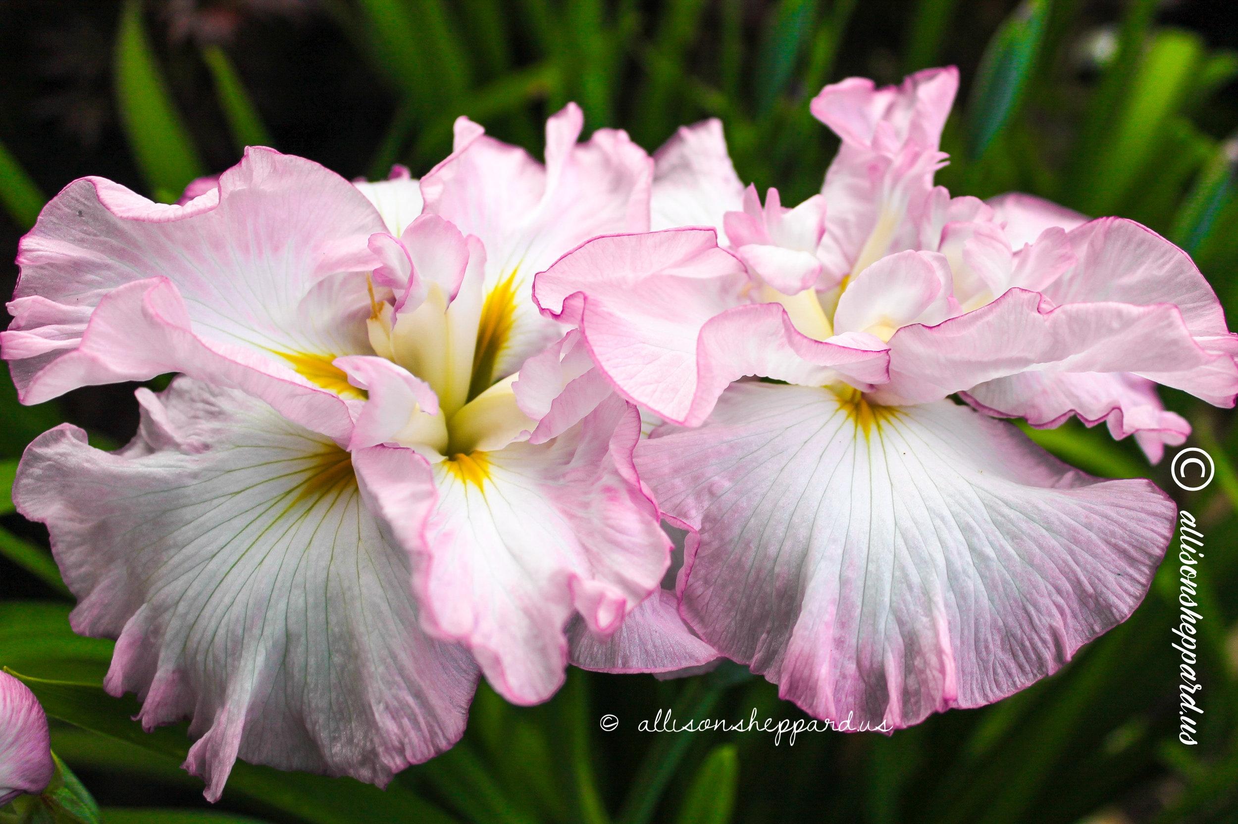 flora-fauna-2.jpg