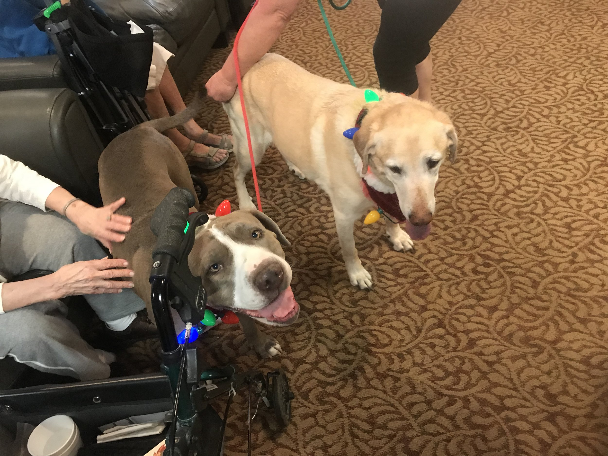 Petunia and JoJo are spreading love at Olive Grove Retirement Center. December 2018.