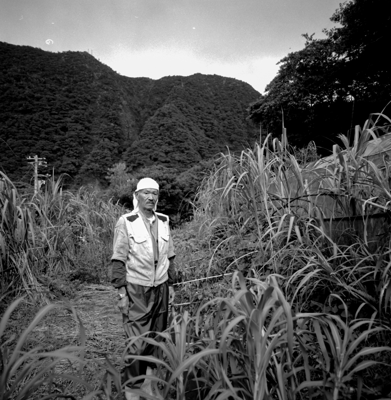 In the Sugar Cane