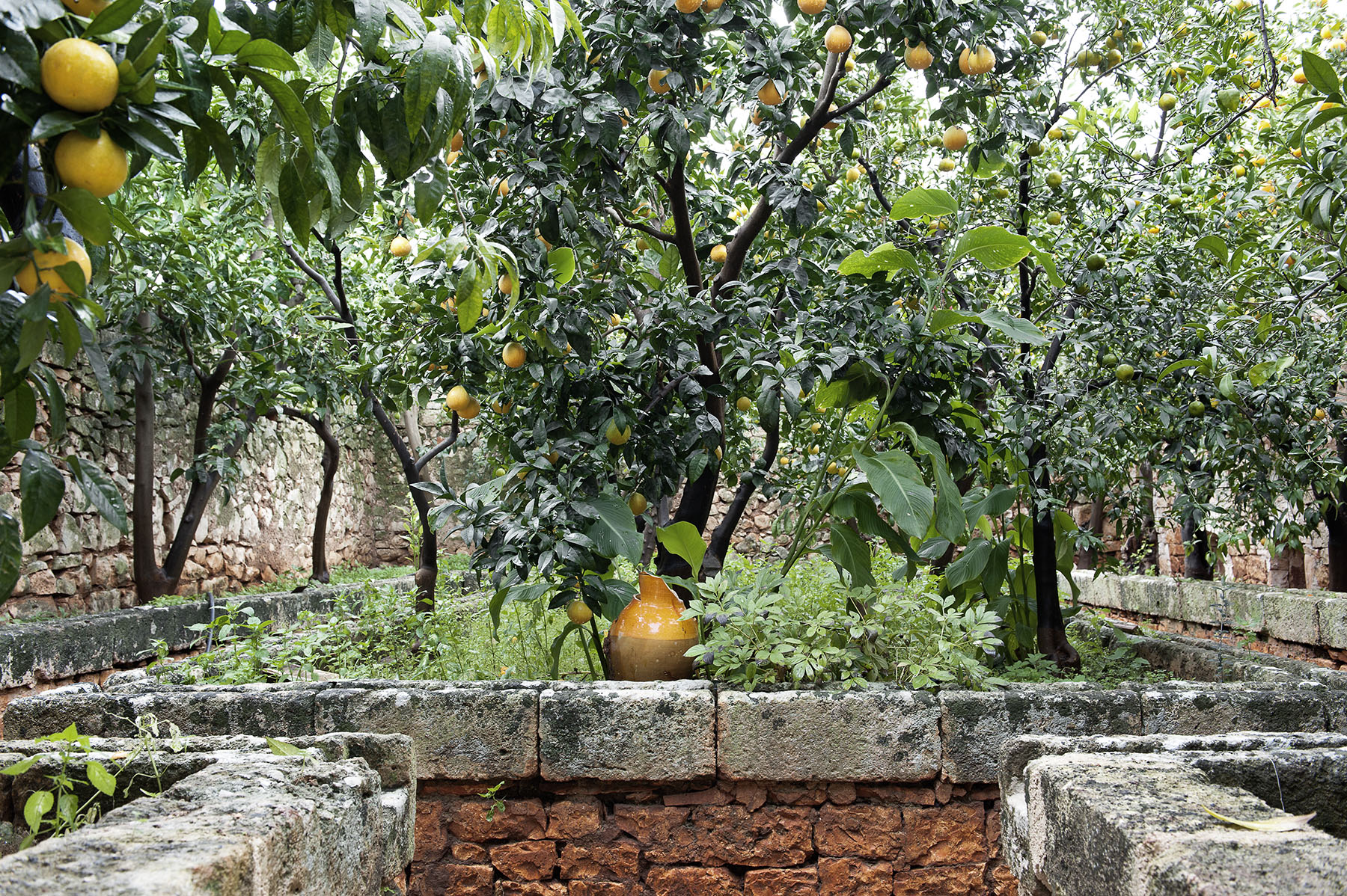 citrusgrove.jpg