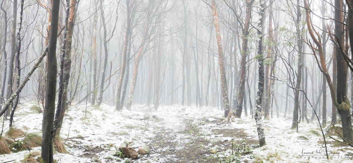 Snow Mt Macedon