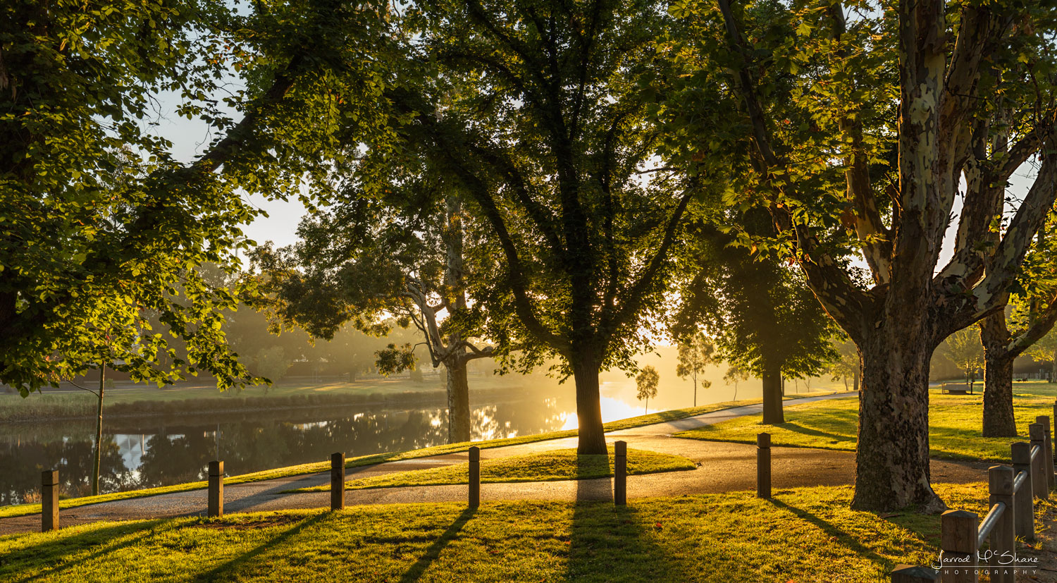 Sun popping up behind the trees along the Capital City Trail in Melbourne