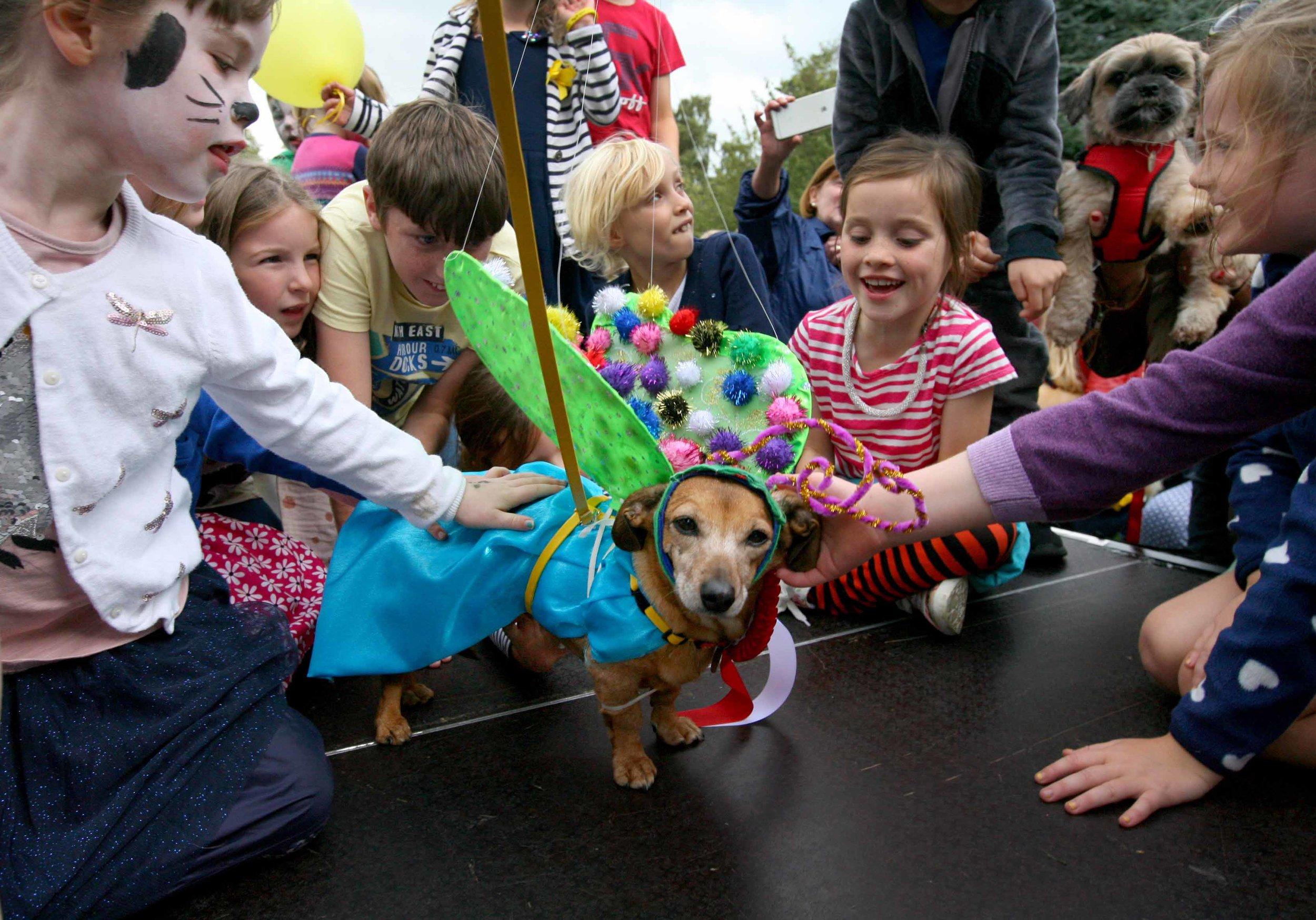 NO FEE 6 Doggie Do fest.jpg