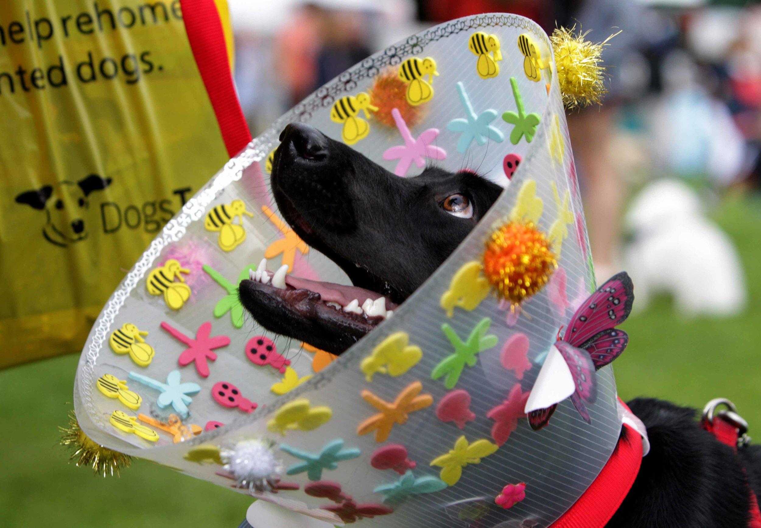 NO FEE 2 Doggie Do fest.jpg