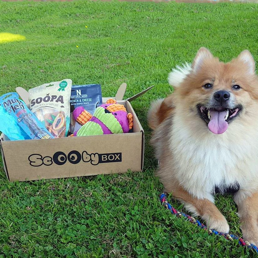 SCOOBY BOX  is a customisable subscription treat box for your furry friend.Our boxes come bursting with some very special items each month. Fun toys, healthy organic treats & cool accessories that your dog is sure to ruv!