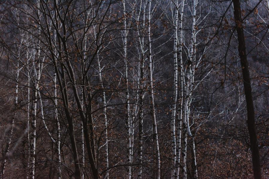 Tessin Jan17-6.jpg