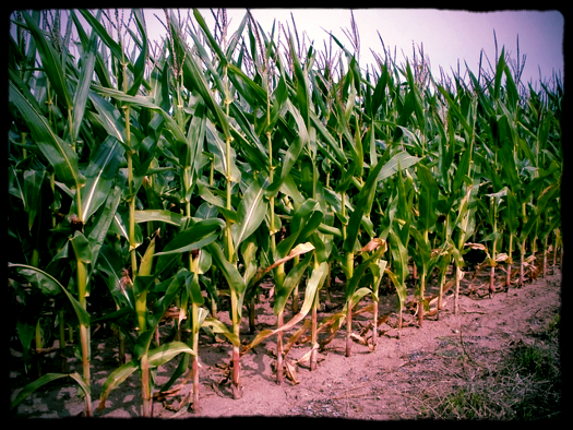 Trade discussions are a-maize-ing! ... Too corny?