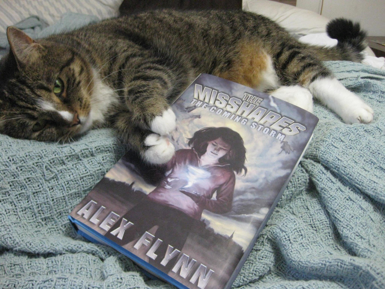 Today's a really special and exciting day.  The Misshapes  is now available in hardcover!  My cat is celebrating!  It's been a long journey for these little superheroes-that-could, and I'd be honored if you got the chance to read it. If you feel like requesting it from your local library that would be the biggest honor of all!    It should be available at your finer booksellers; if not, you can order it. Here's the online details so you could have it right this second!     You can order THE MISSHAPES: The Coming Storm in hardcover   Barnes & Noble: http://www.barnesandnoble.com/w/the-misshapes-a…/1118590464…  Amazon: http://www.amazon.com/The-Misshapes-Alex-Flynn/dp/1940610311  Indiebound: http://www.indiebound.org/book/9781940610313    As well as eBook Kindle: http://www.amazon.com/Misshapes-Ale…/…/ref=tmm_kin_swatch_0…  Nook: http://www.barnesandnoble.com/w/the-misshapes-a…/1118590464…  iBooks: https://itunes.apple.com/us/book/the-misshapes/id800927901…  Kobo: http://store.kobobooks.com/en-US/ebook/the-misshapes-1  Google Play: https://play.google.com/…/books/d…/Alex_Flynn_The_Misshapes…
