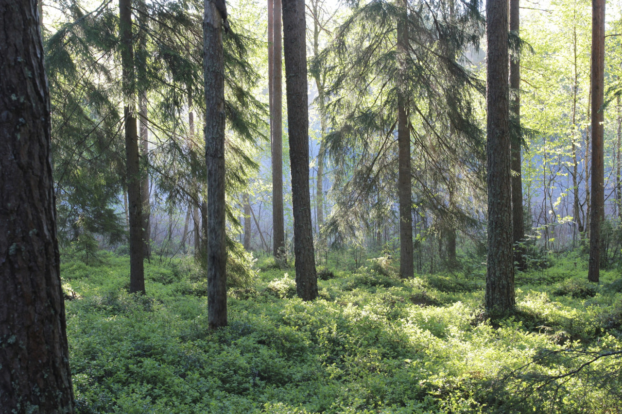 Here is an enchanted Swedish forest for you.