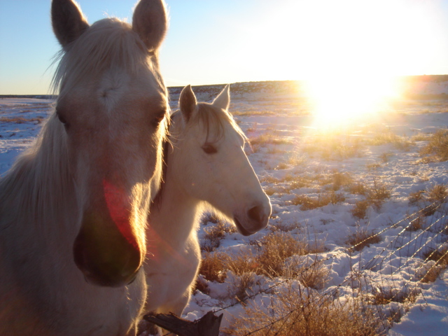 heartbeatcity :     (via  cosmic-dust )   these guys look like they'd make good friends.       Gorgeous photo. Love the light.