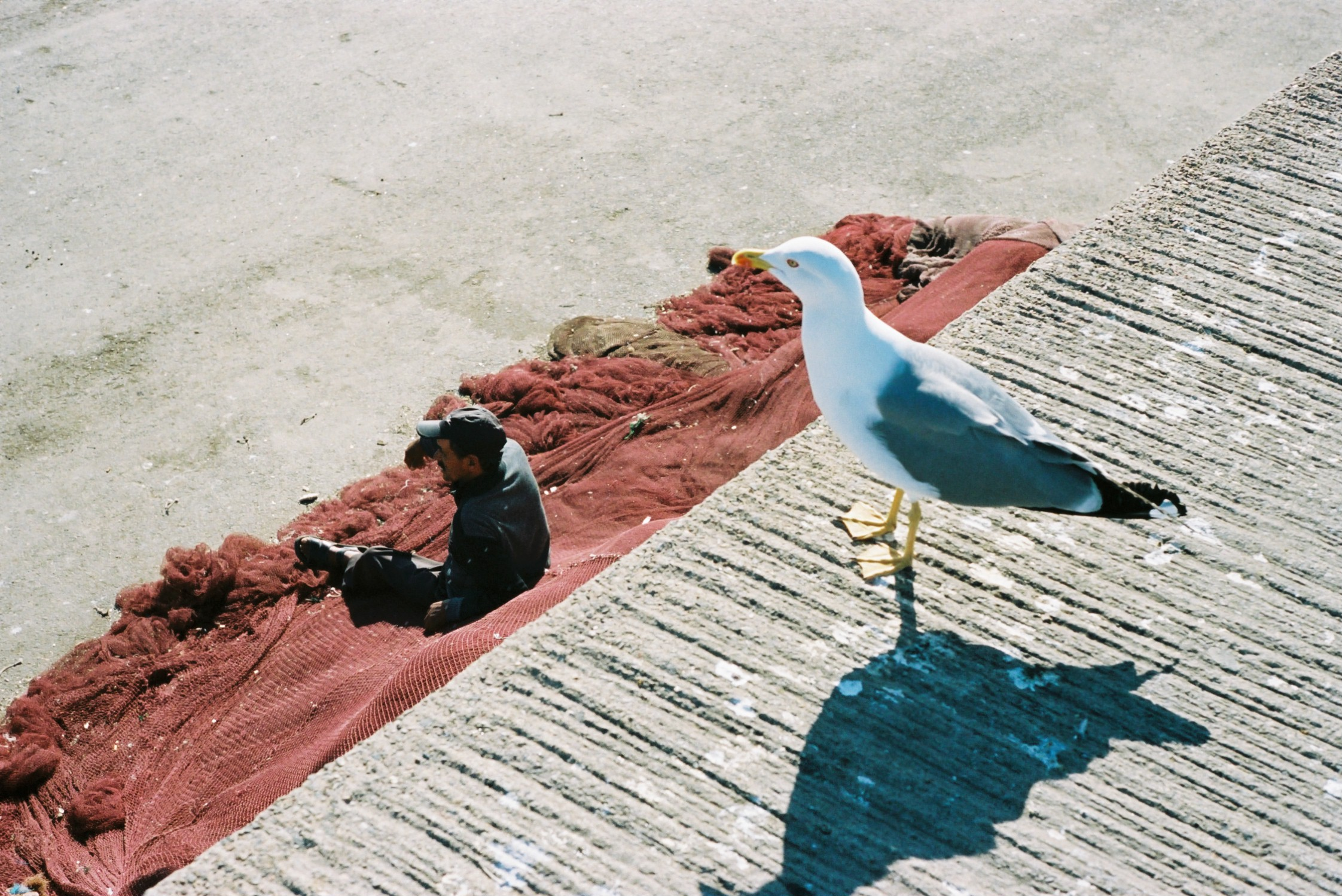 20birds - alexis dubourdieu.JPG