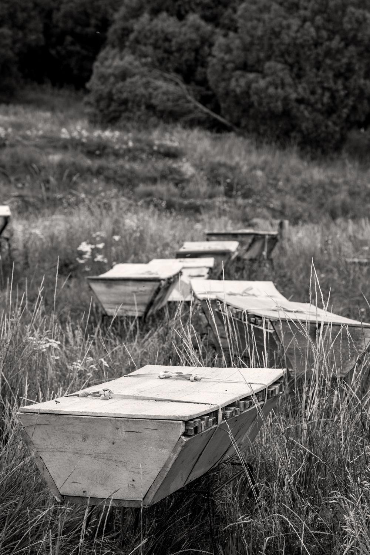 BeeHives-52.jpg