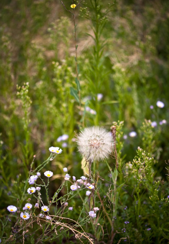 HerbsWildflowers-32-Edit.jpg