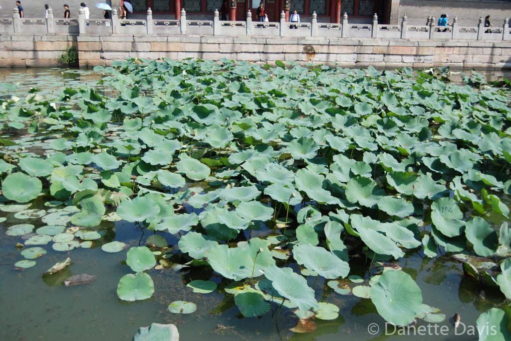Summer Palace Pond Worker_0036.jpg
