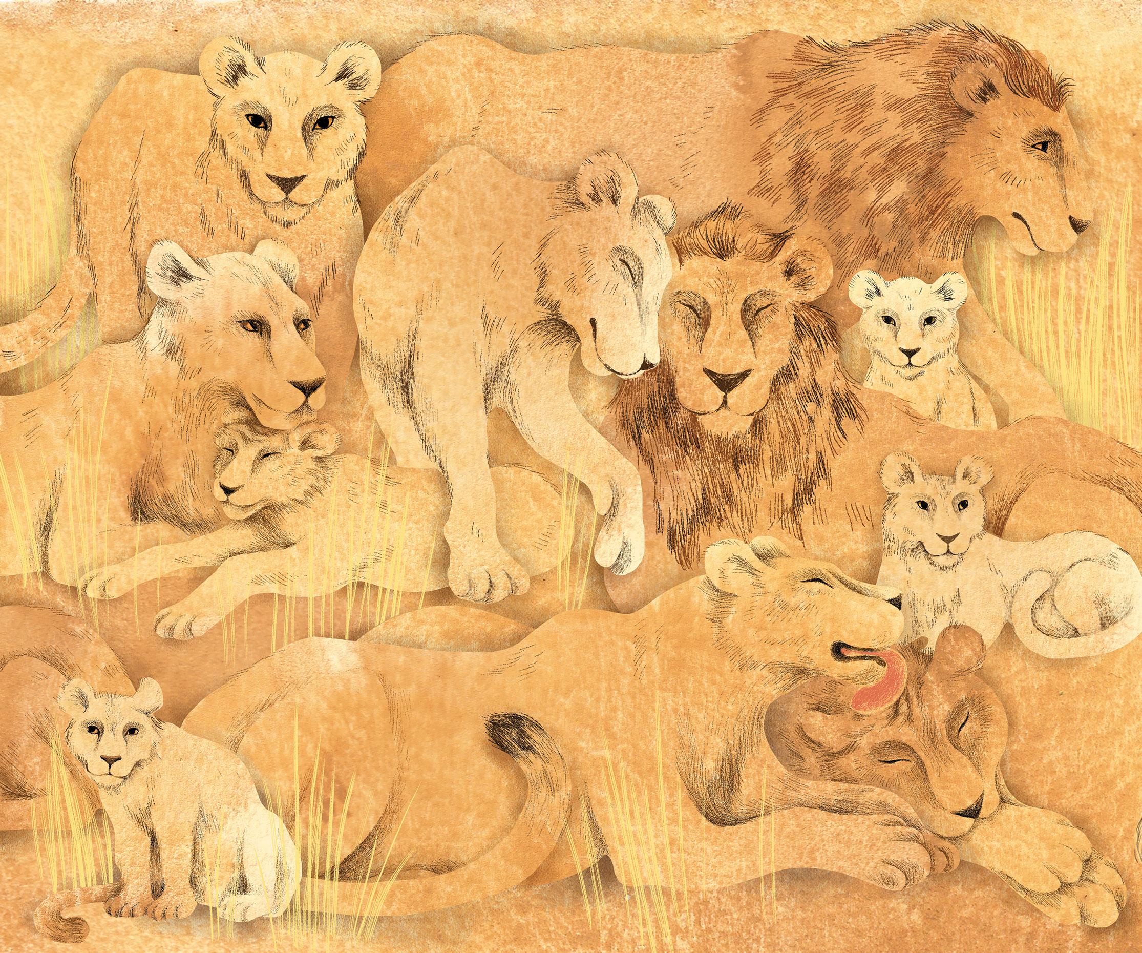 Lions_web.jpg