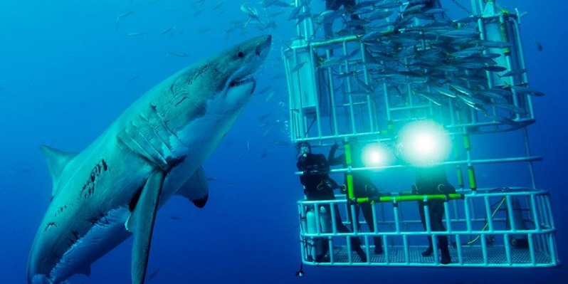 Photo courtesy of Shark Zone South Africa.