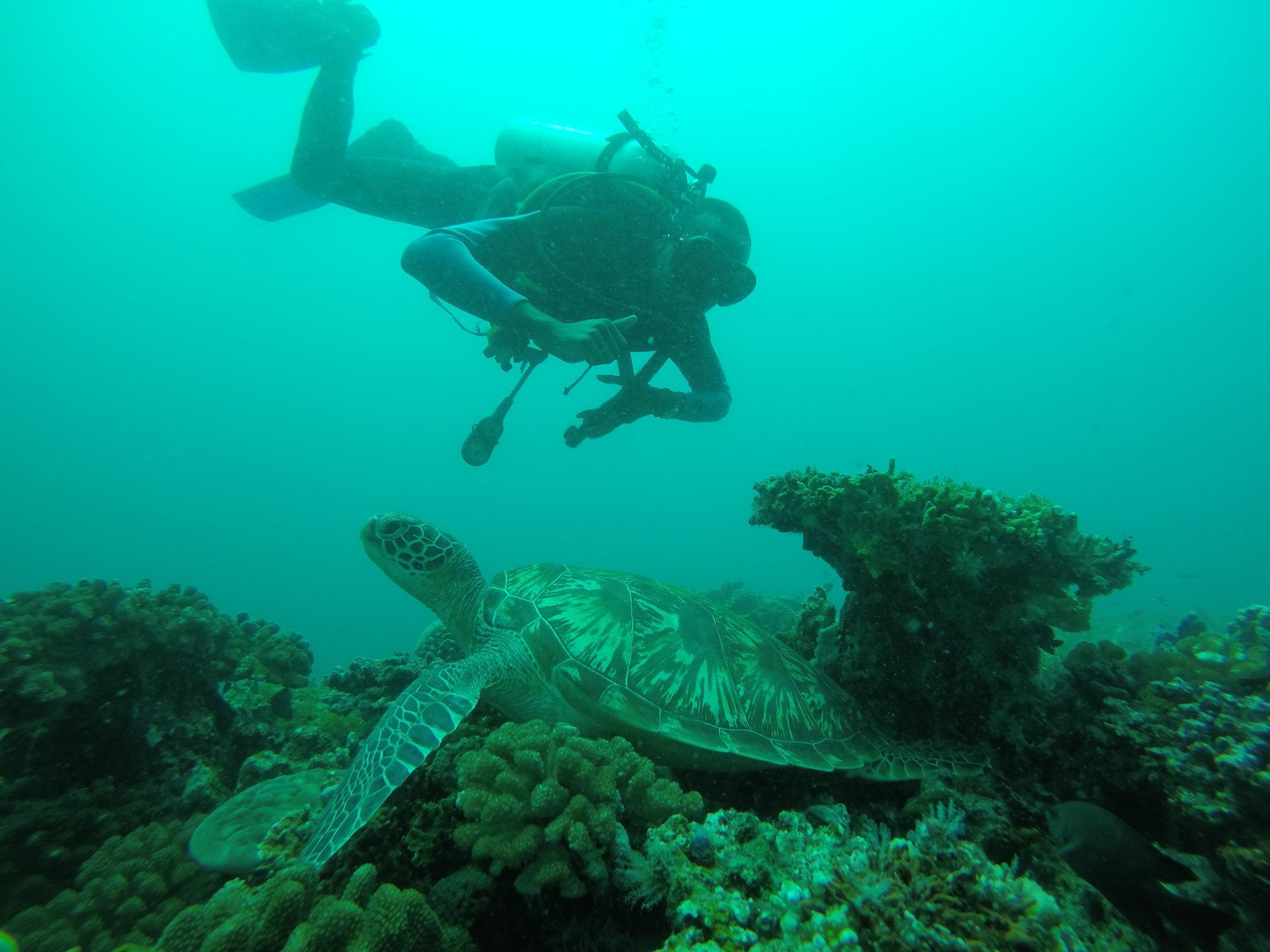 Snorkeling in Bali