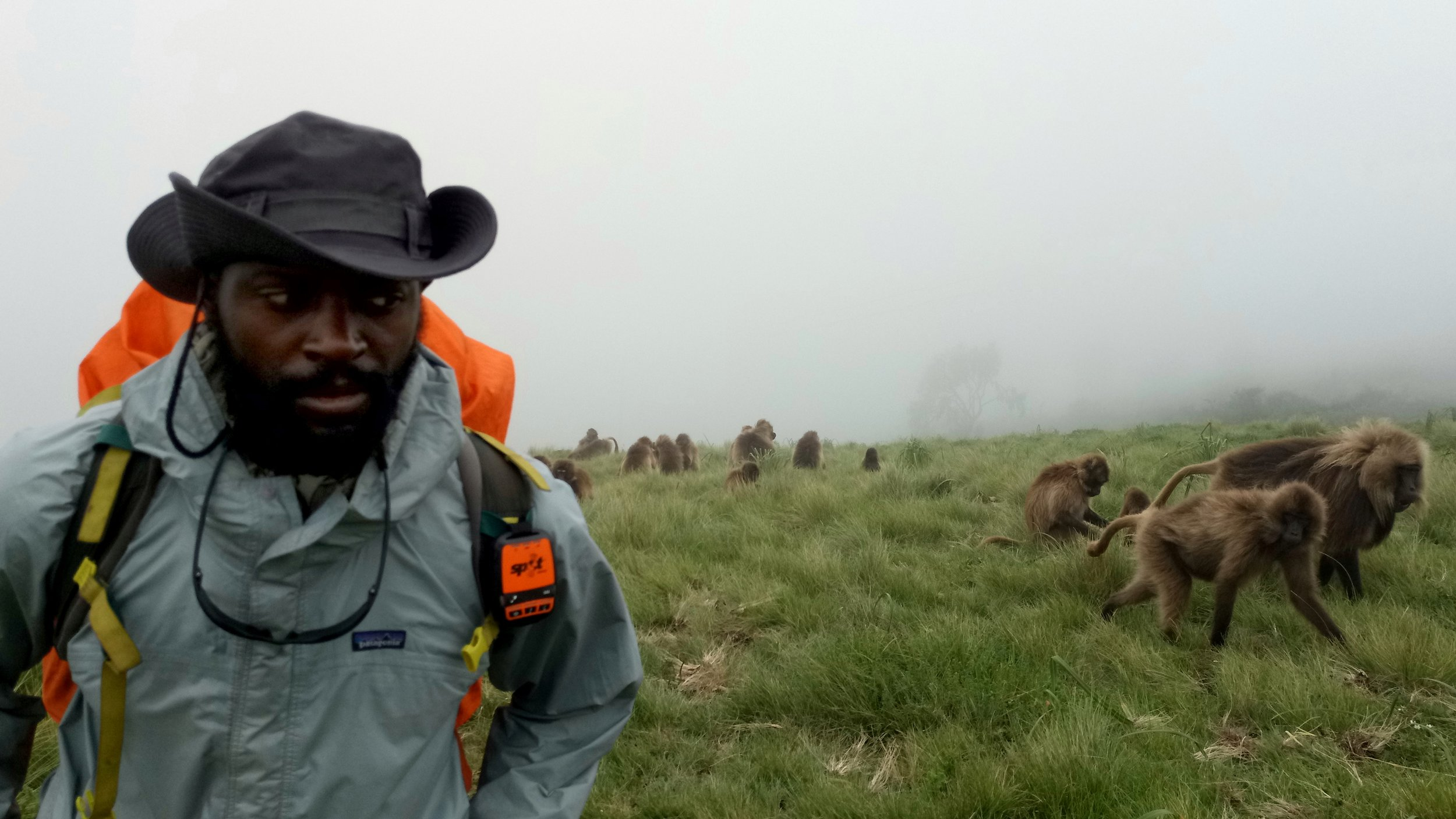 Surrounded by hundreds of Gelaba Baboons on the Simien Mountains