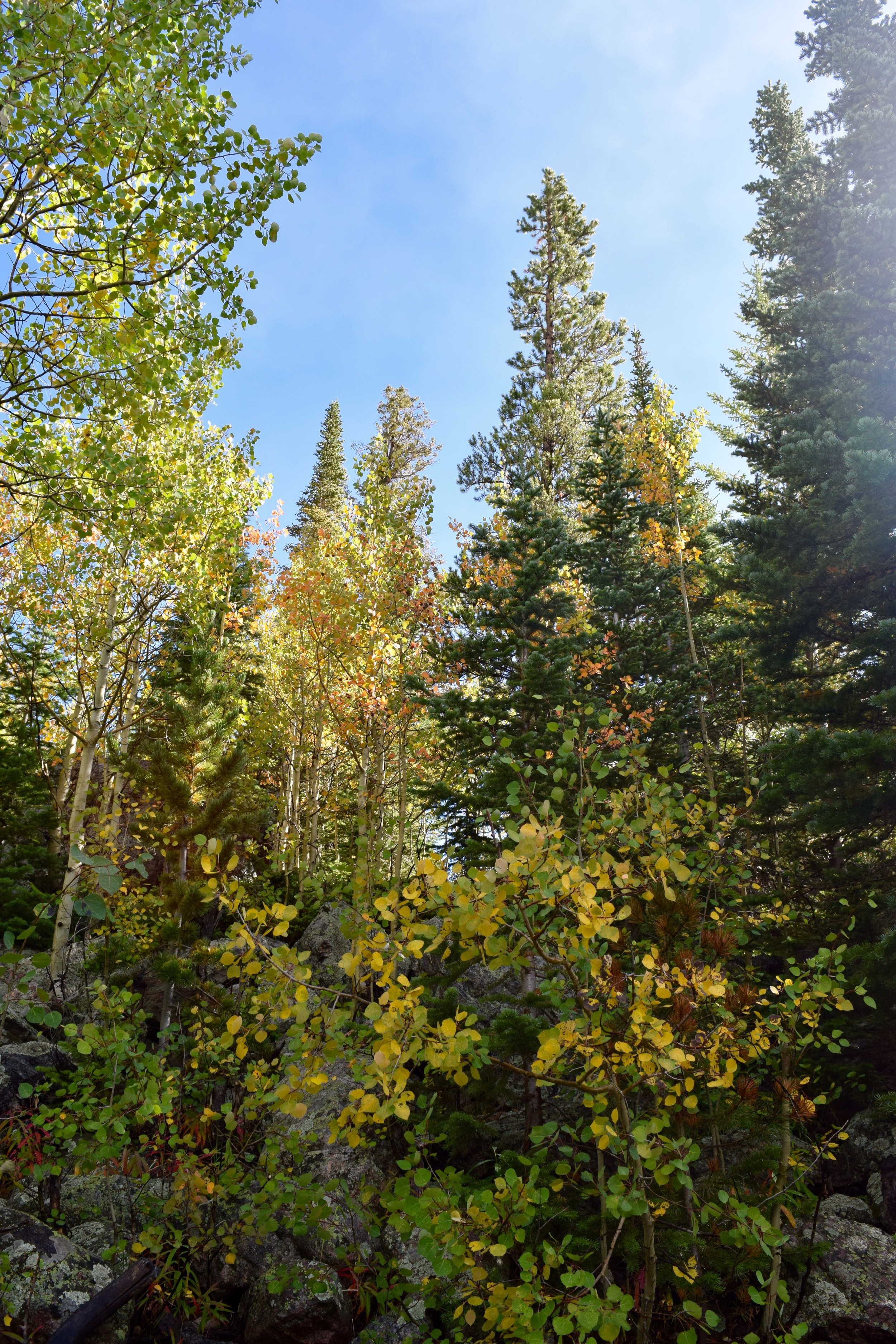 First signs of fall on the shores of Bear Lake, so excited for the aspens to all turn gold