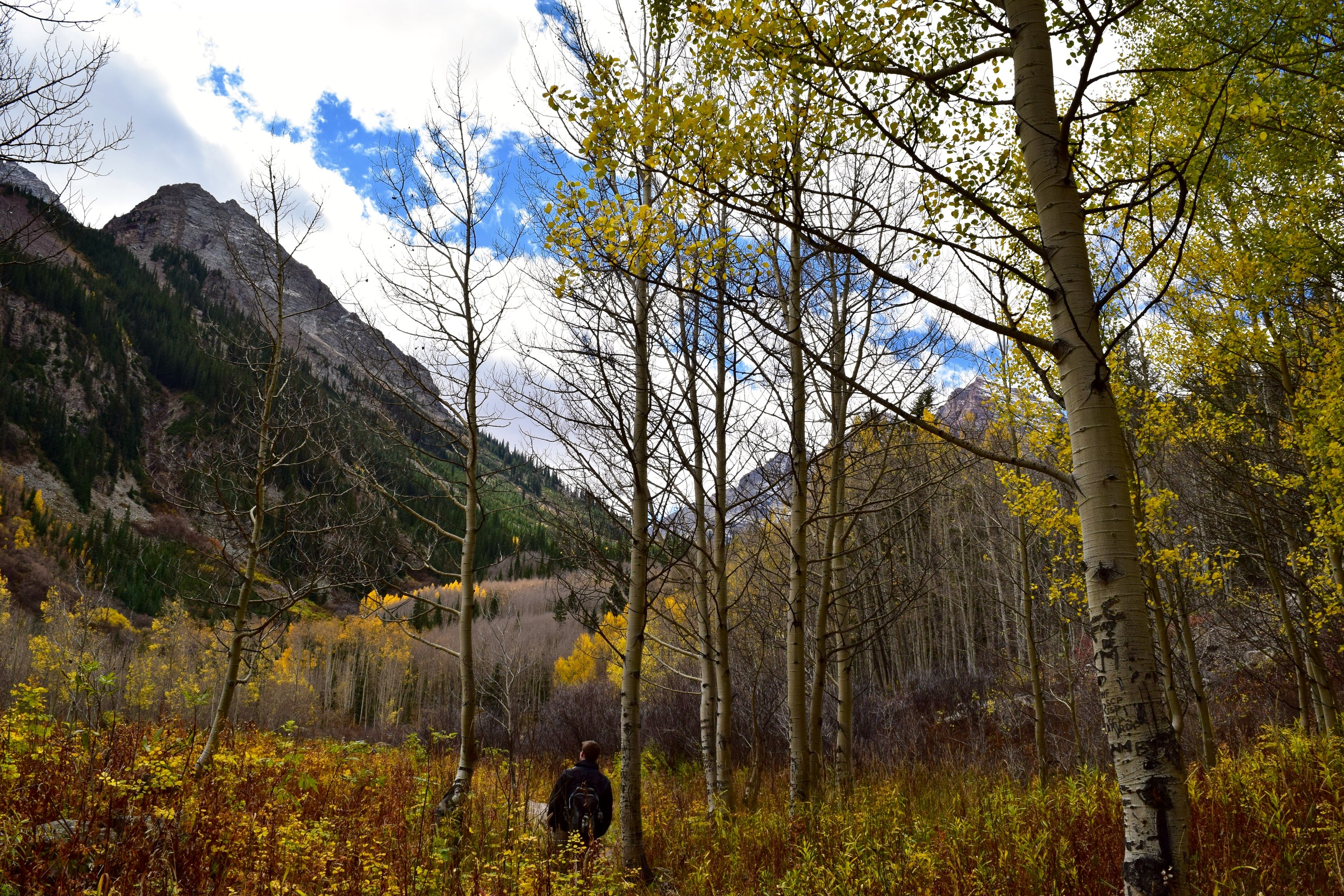 This is probably super sappy, but adventuring with this guy is my favorite. Logan looking around at the aspen grove we trekked through
