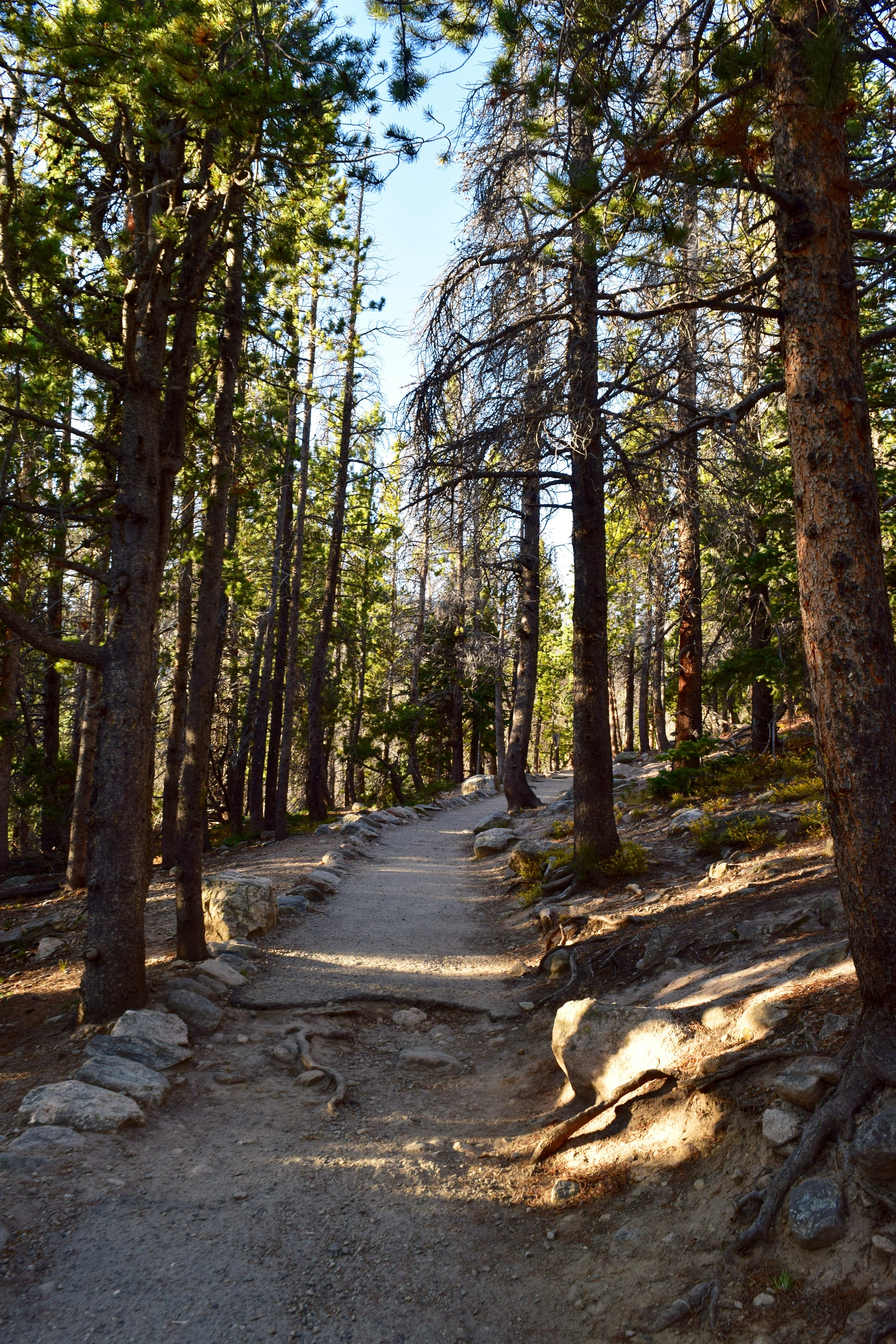 One thing I love about RMNP is the condition of their trails. Just look how beautiful this is.