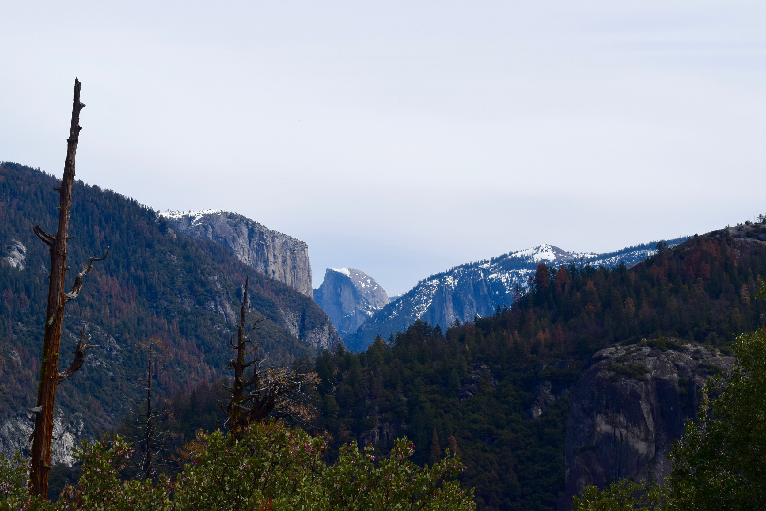 Our first glimpse of Half Dome! (this isn't tunnel view, it was just on the road driving into the valley)