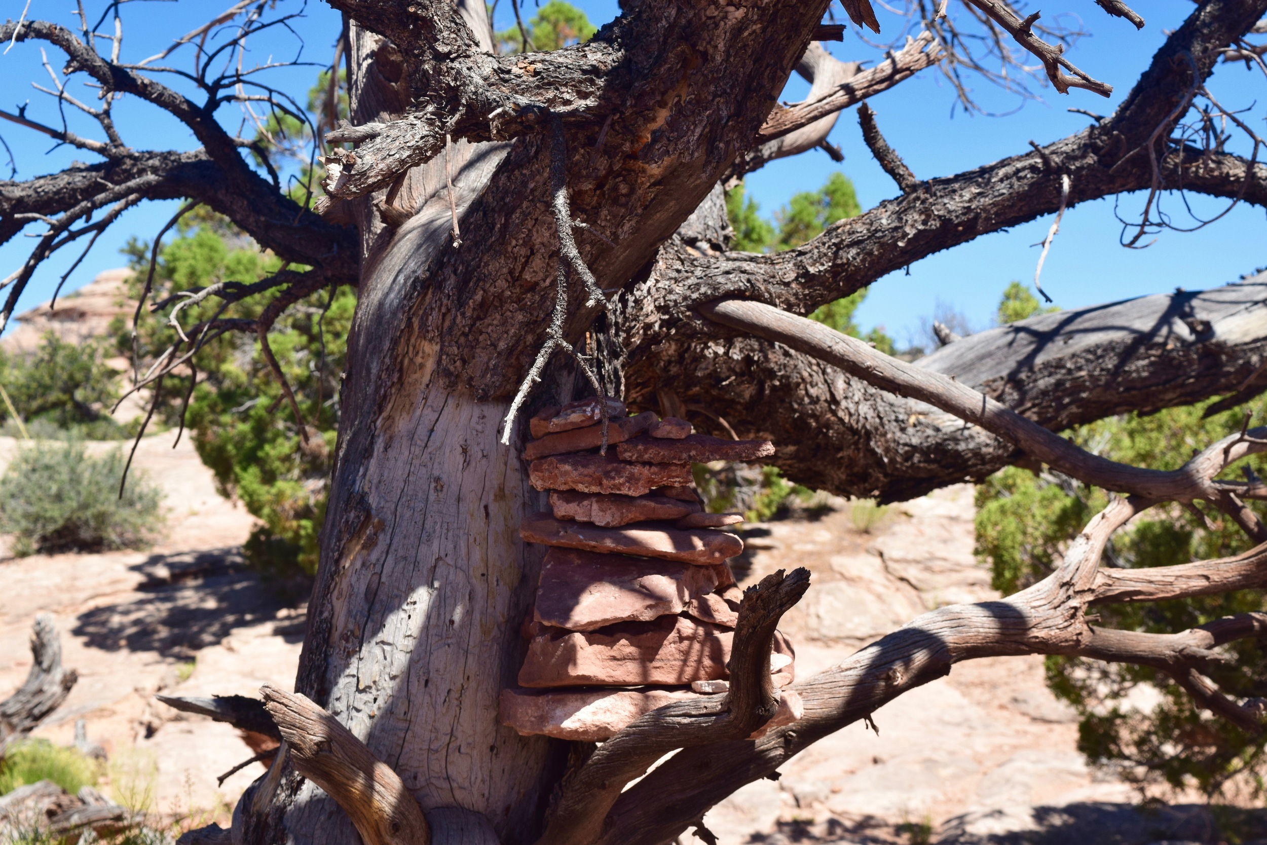 Cairn in a tree, because why not.