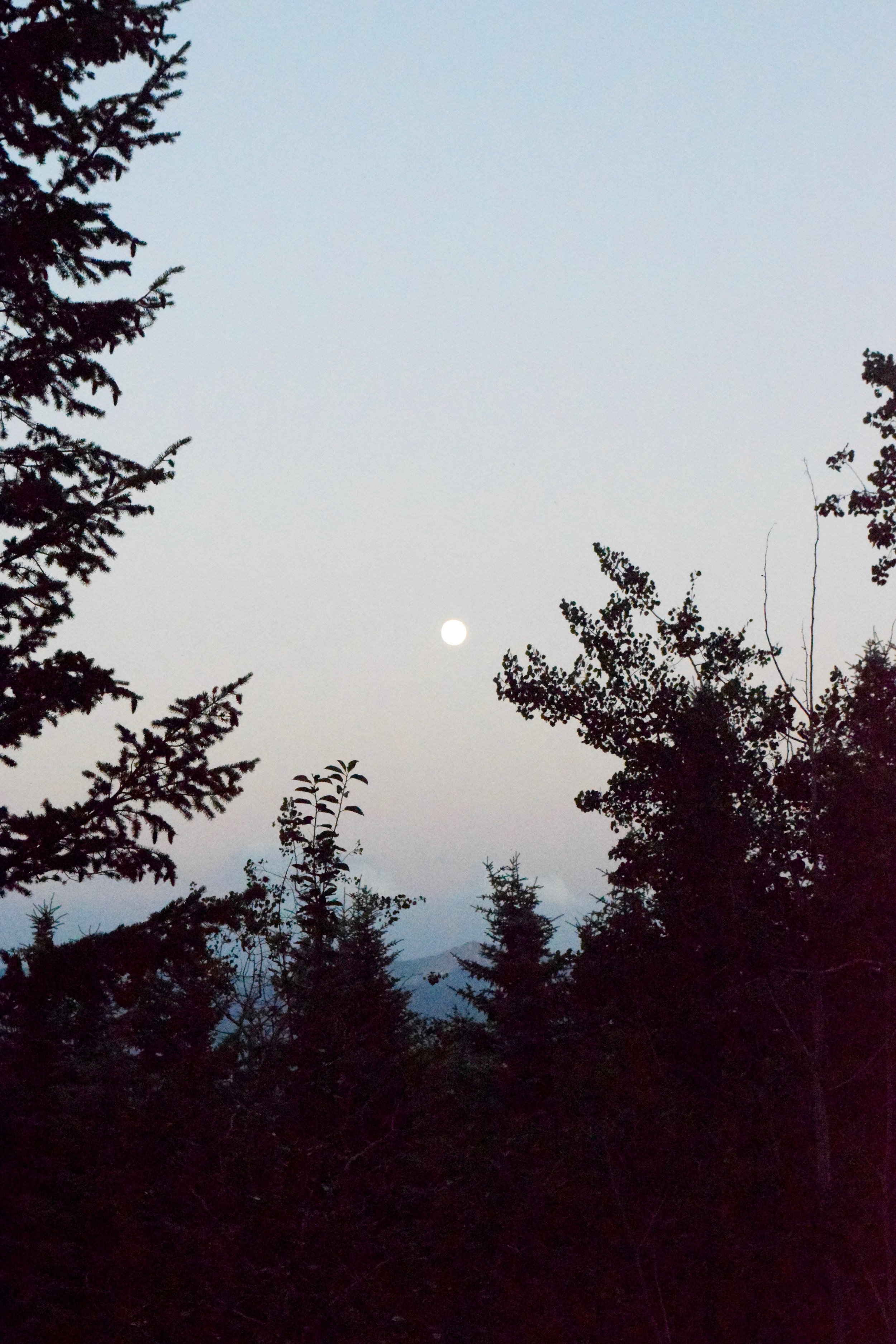 An almost full moon seen from Moose-Wilson Road.