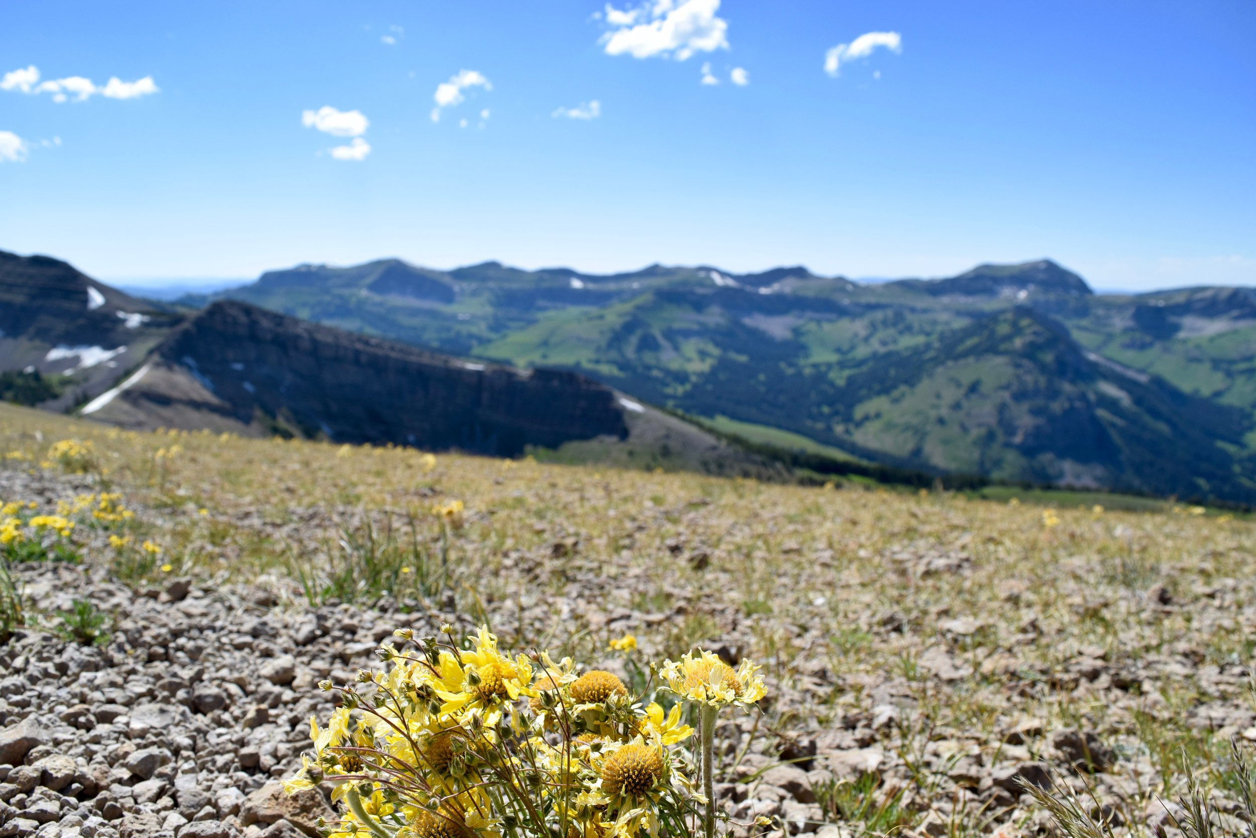 I think in a past life I was an alpine wildflower.