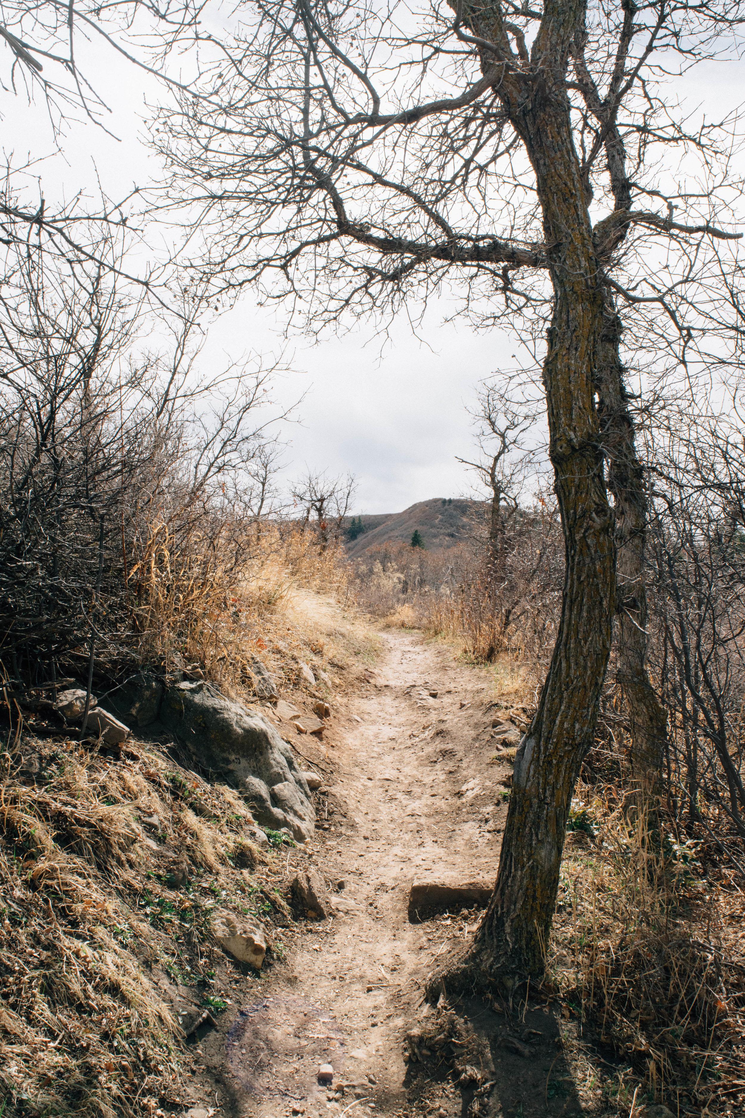 south rim trail-5.jpg