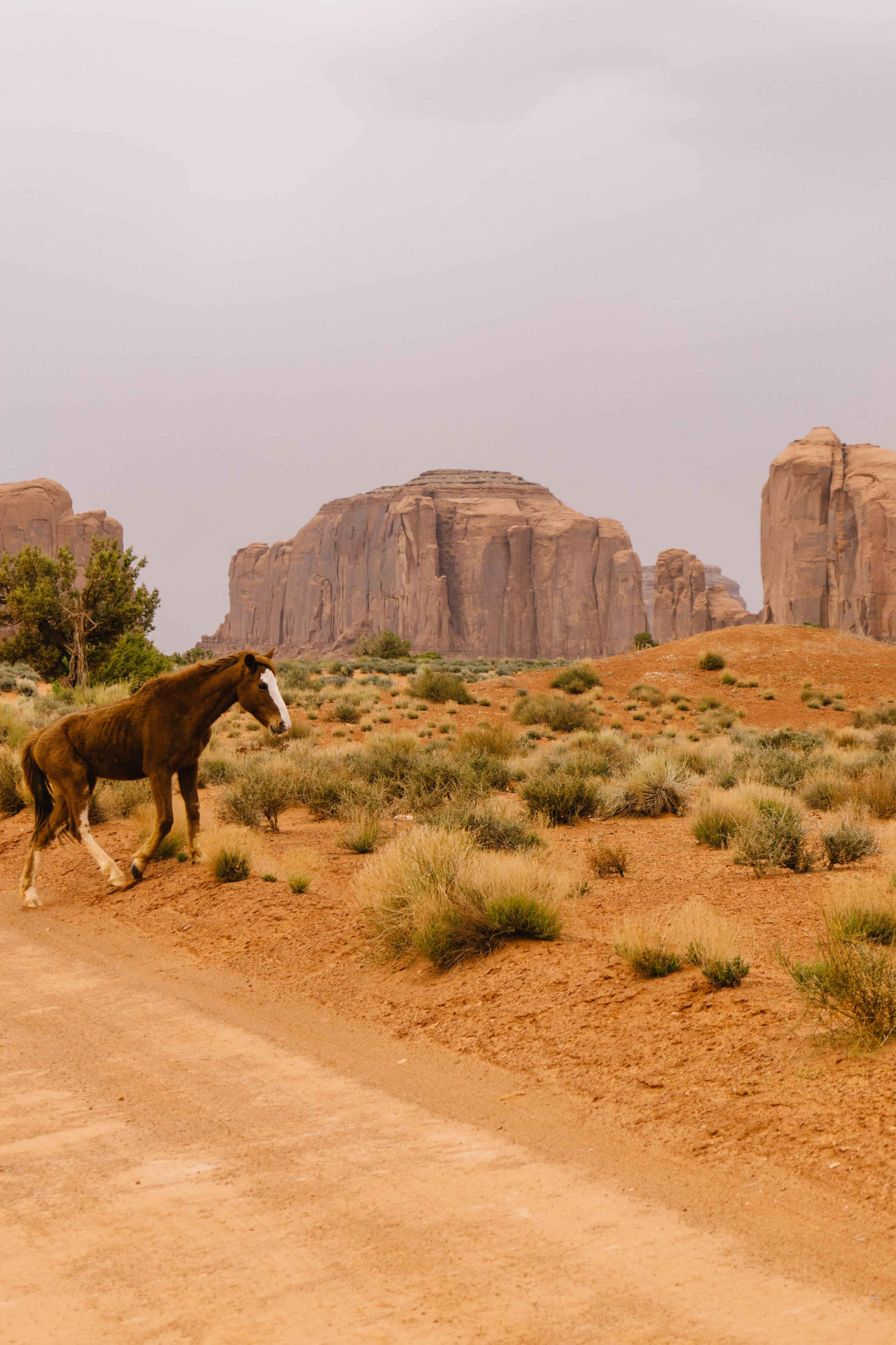 More almost-wild horses!