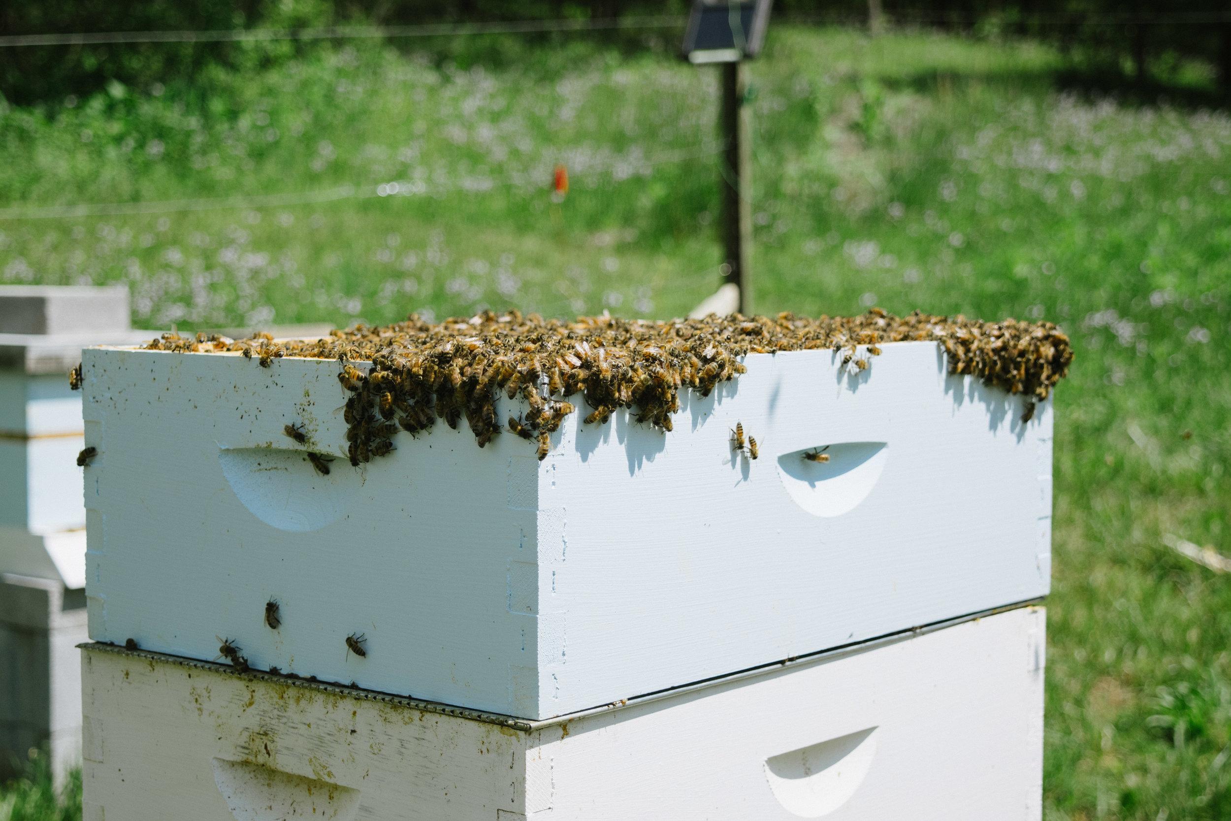 Freshly split bee box, more on that below!